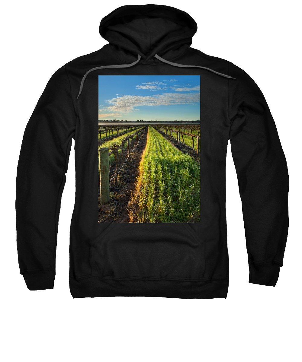 Vineyard Sweatshirt featuring the photograph Barossa Vineyard Morning by Mike Dawson