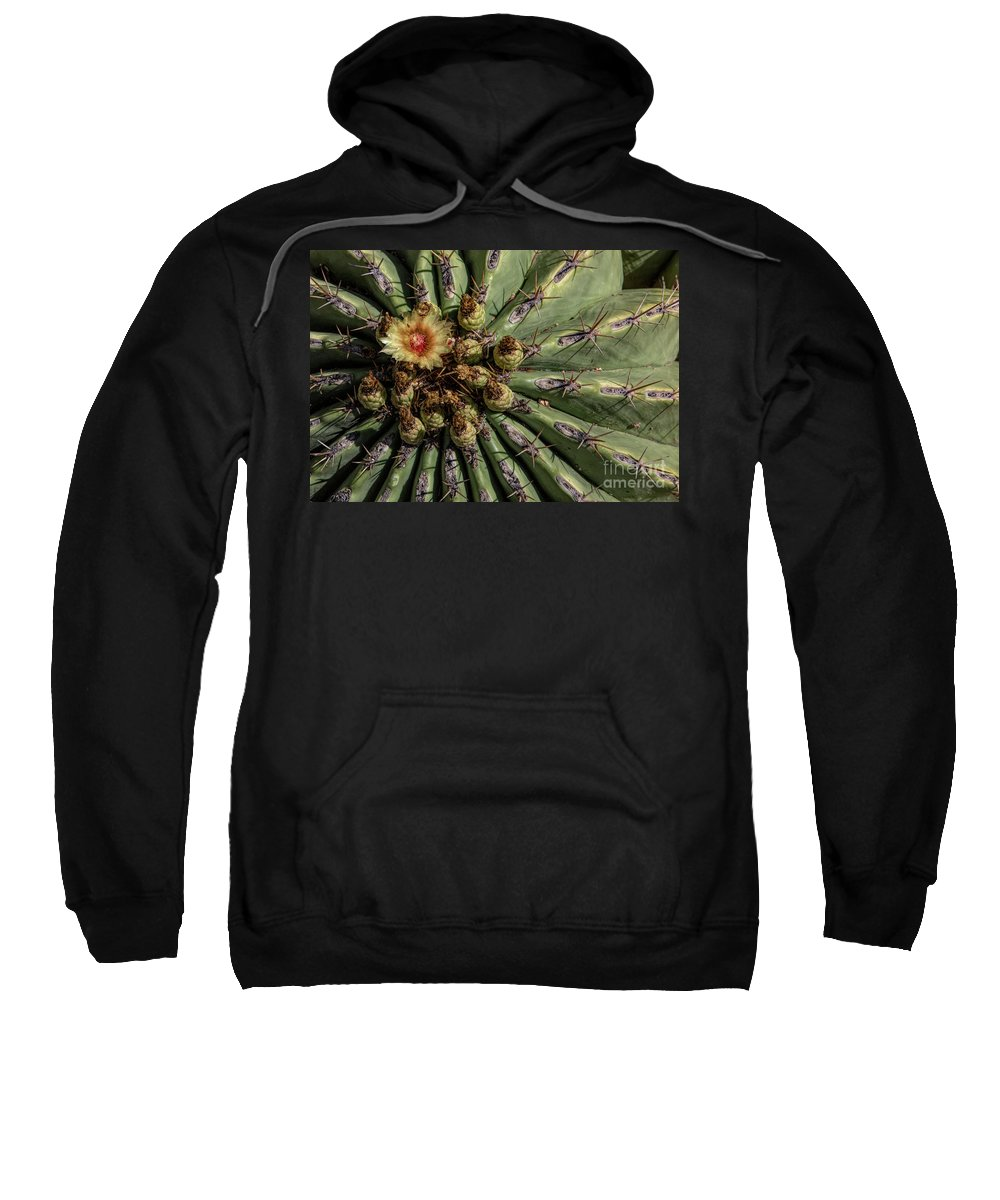 Cactus Sweatshirt featuring the photograph Barrel Cactus Blossom by Elisabeth Lucas