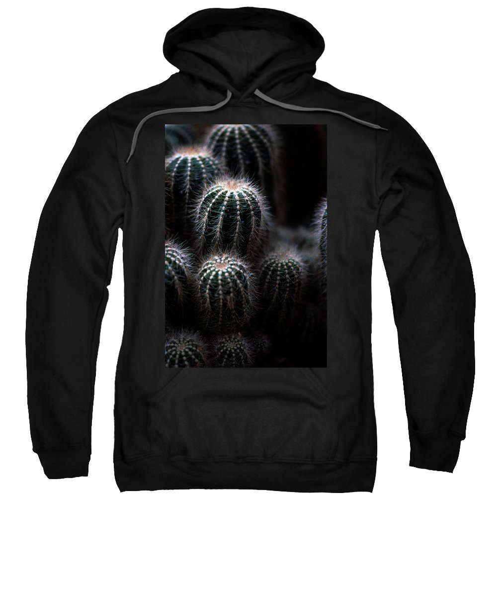Brrel Cacus Sweatshirt featuring the photograph Barrel Cactus by Laurie Paci
