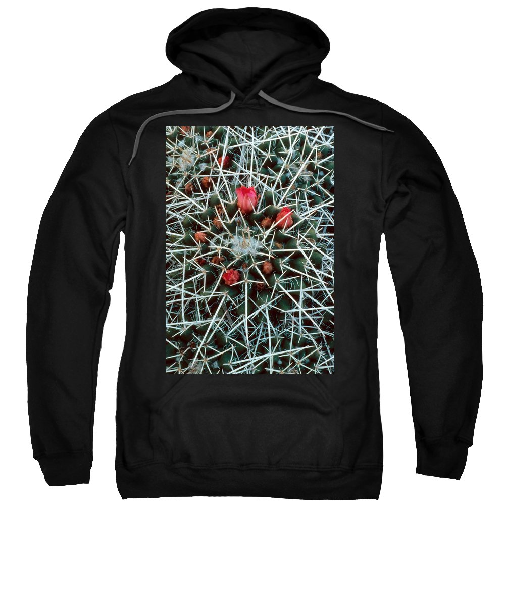 Barrel Cactus With Pink Blooms Sweatshirt featuring the photograph Barrel Cactus With Pink Blooms by Laurie Paci
