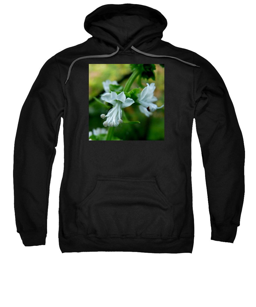 Basil Sweatshirt featuring the photograph Basil Bloom by Valerie Ornstein