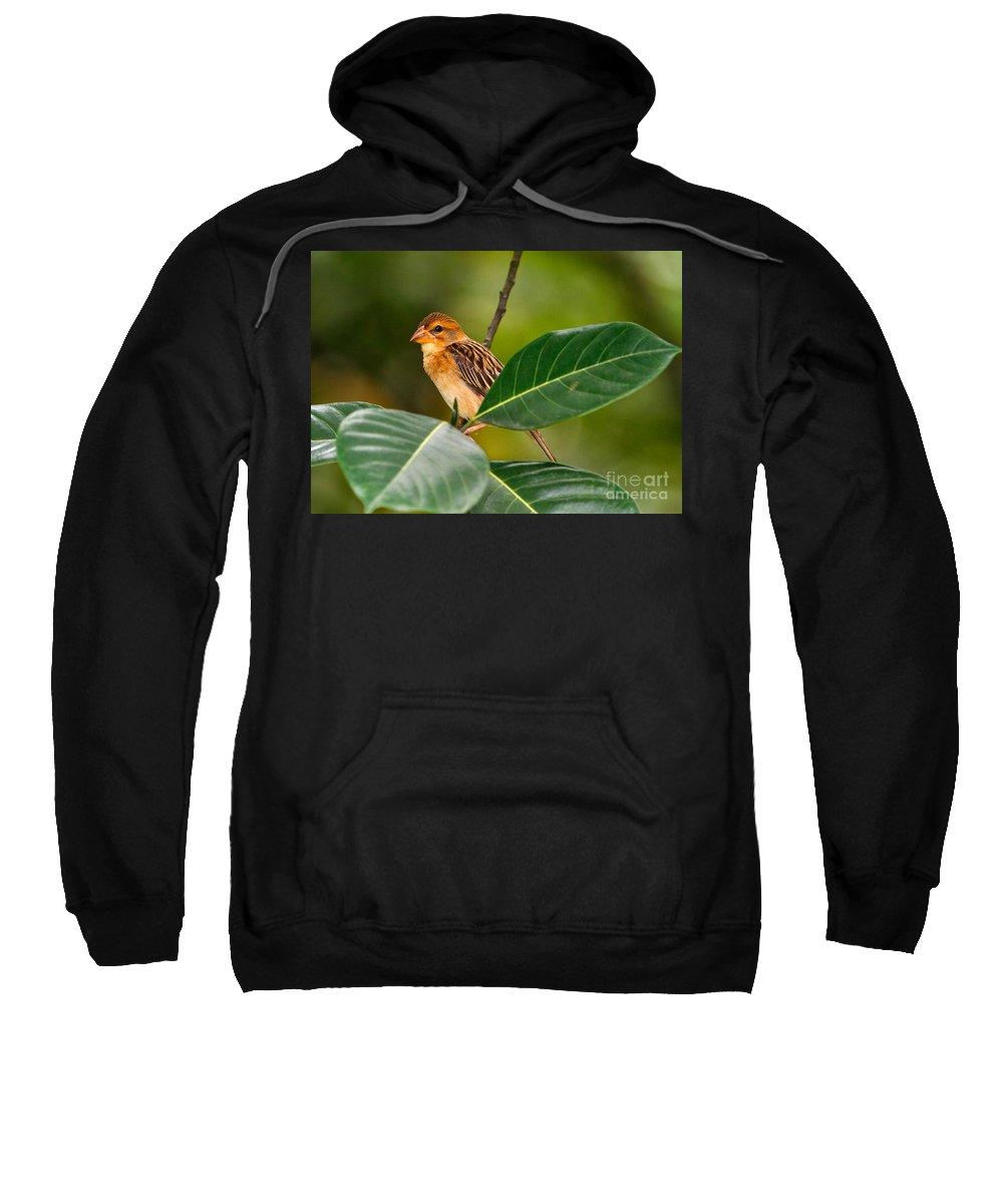 Baya Weaver Sweatshirt featuring the photograph Baya Weaver by Louise Heusinkveld