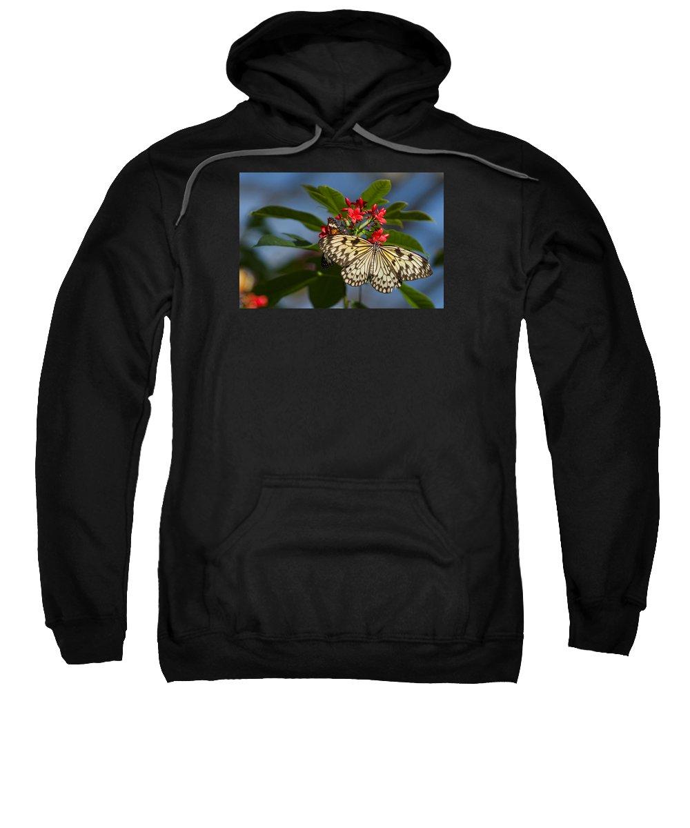 Butterfly Sweatshirt featuring the photograph Beautiful Broken Wings by Ryan Seek