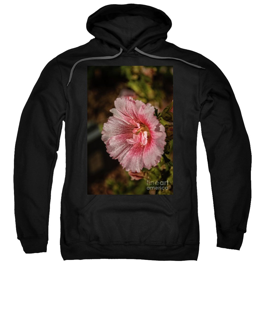 Alcea Rosea Sweatshirt featuring the photograph Beautiful Hollyhock by Robert Bales