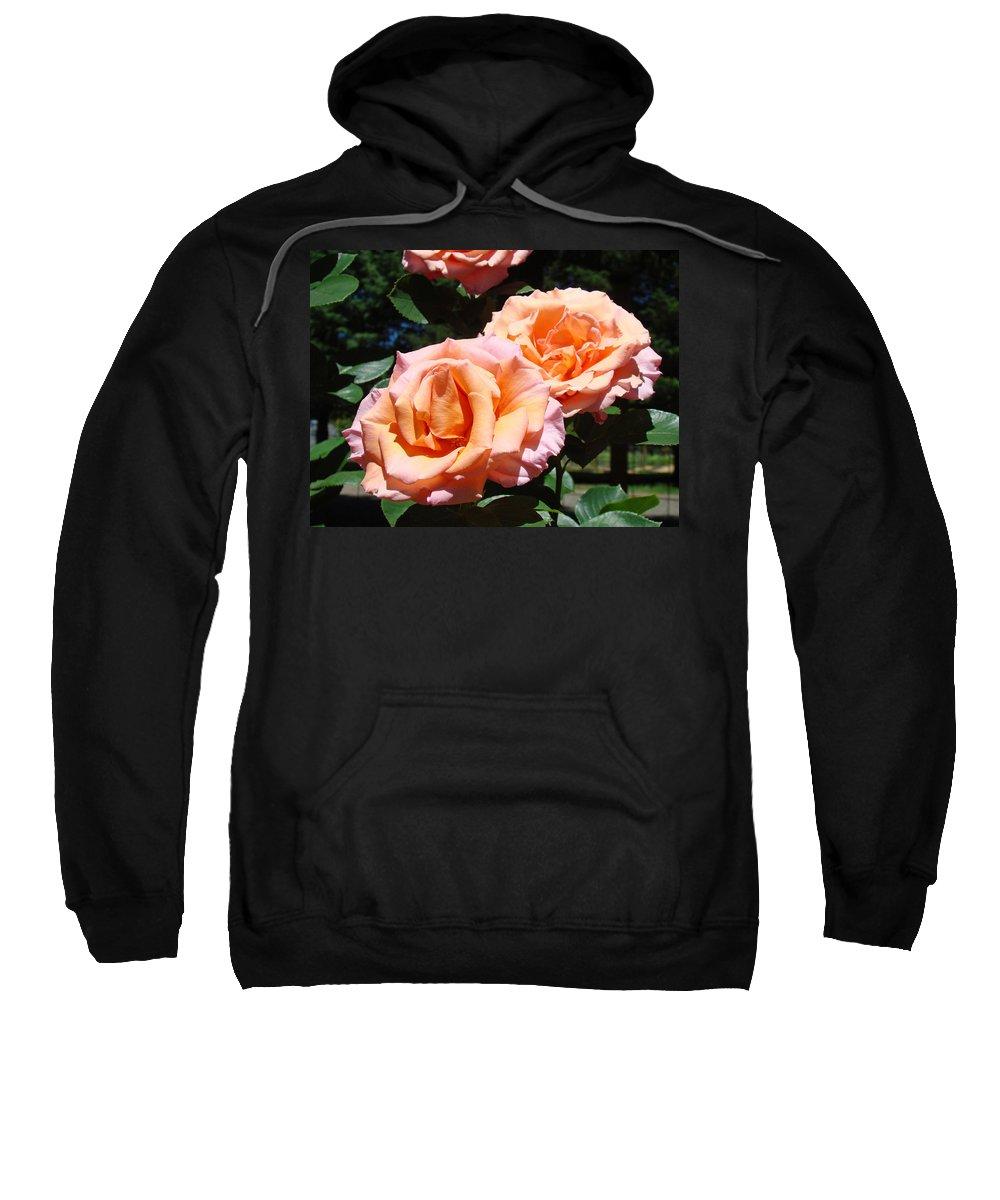 Rose Sweatshirt featuring the photograph Beautiful Pink Orange Rose Flowers Garden Baslee Troutman by Baslee Troutman
