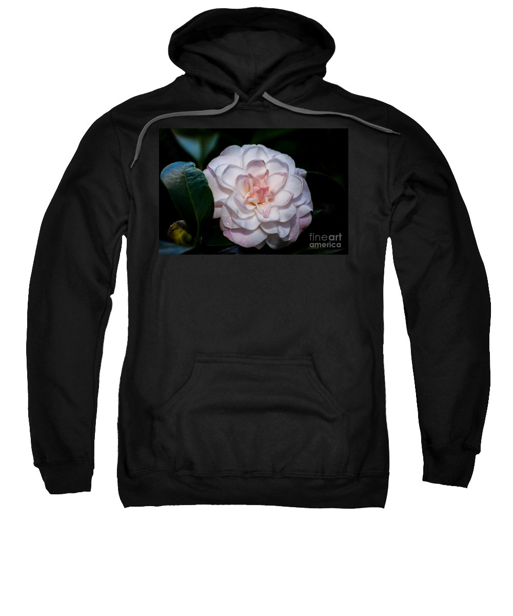 Flora Sweatshirt featuring the photograph Beautiful White Camellia by Zina Stromberg
