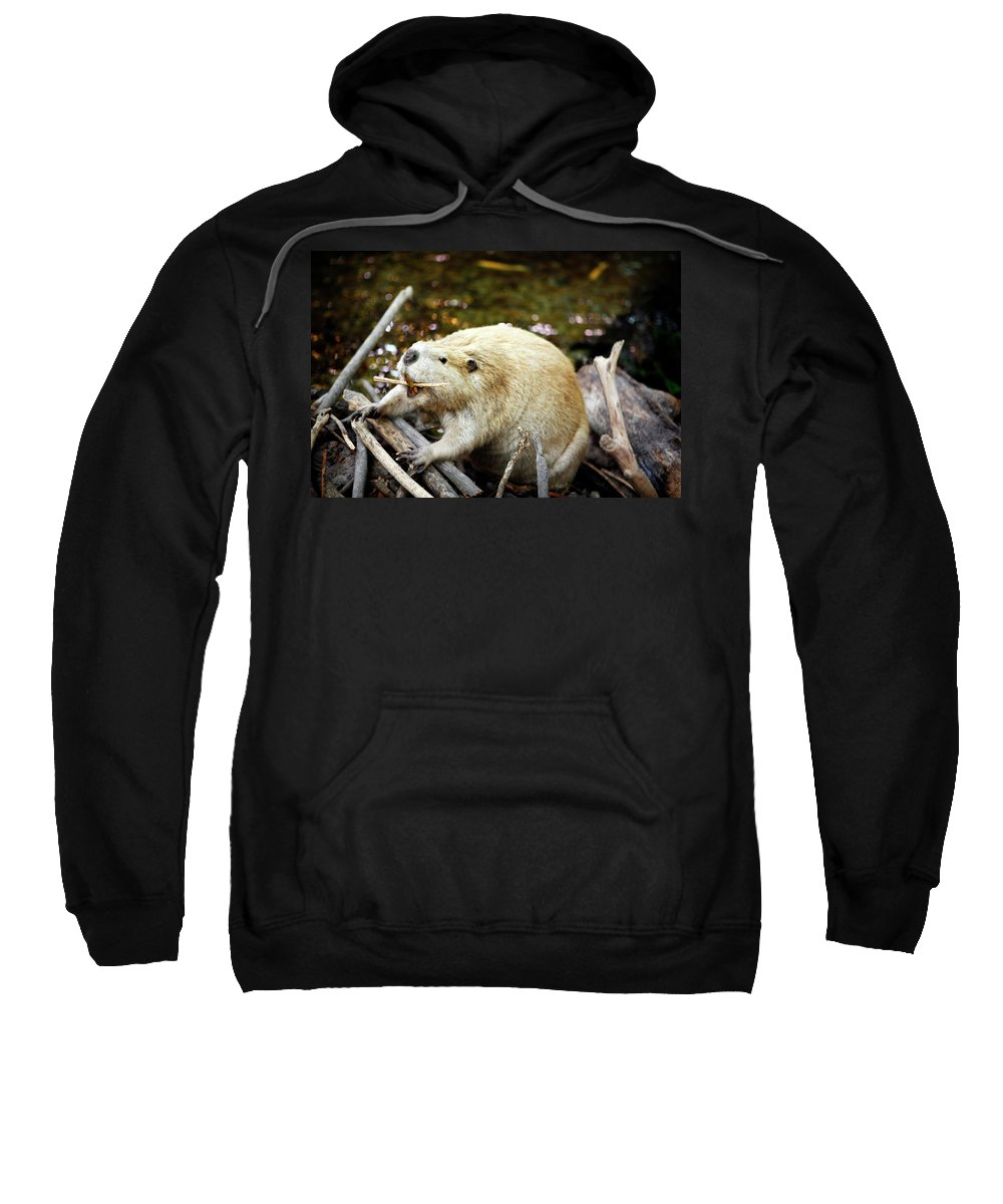 Animal Sweatshirt featuring the photograph Beaver by Marilyn Hunt