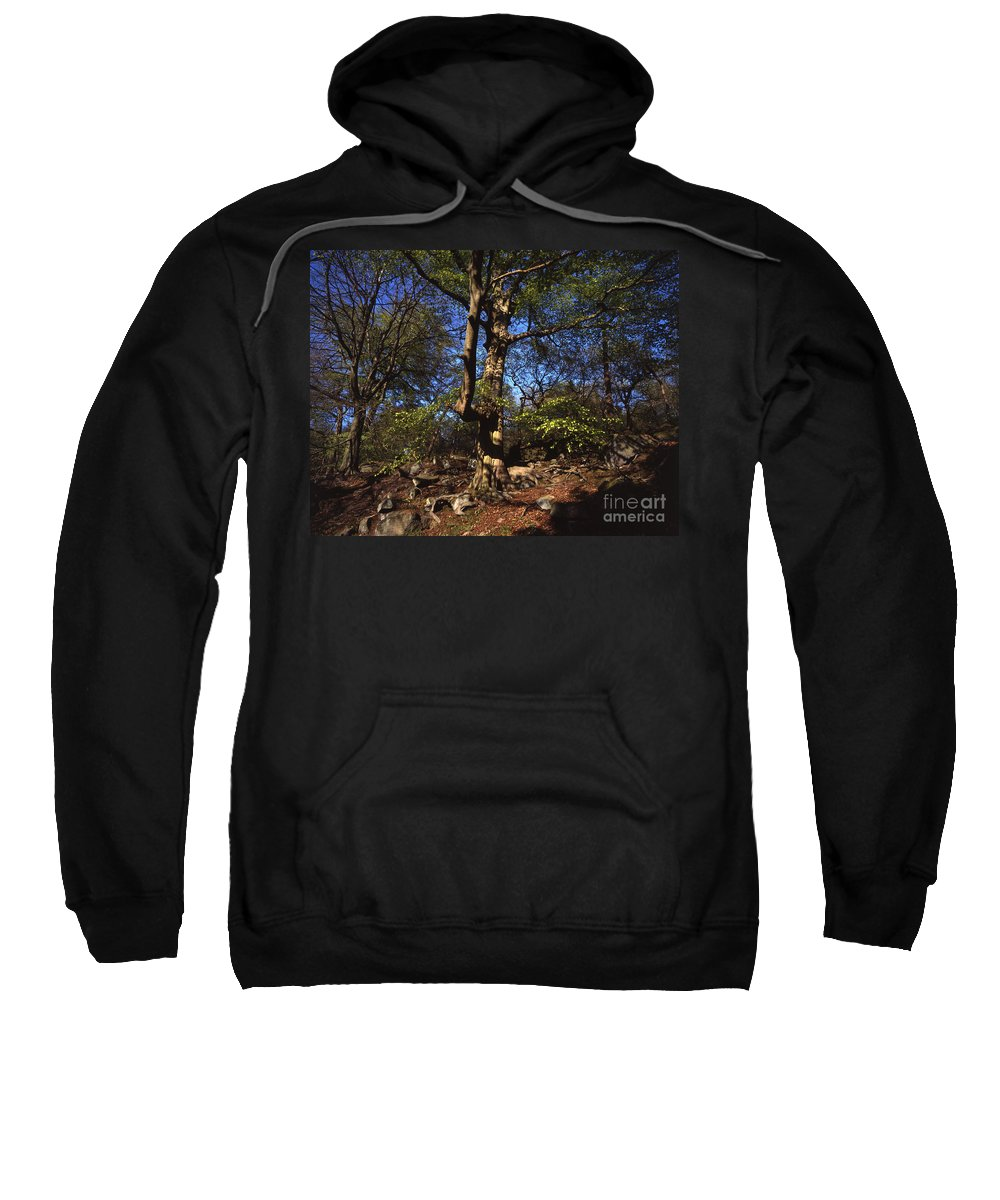 Beech Tree Sweatshirt featuring the photograph Beech Trees Coming Into Leaf In Spring Padley Wood Padley Gorge Grindleford Derbyshire England by Michael Walters
