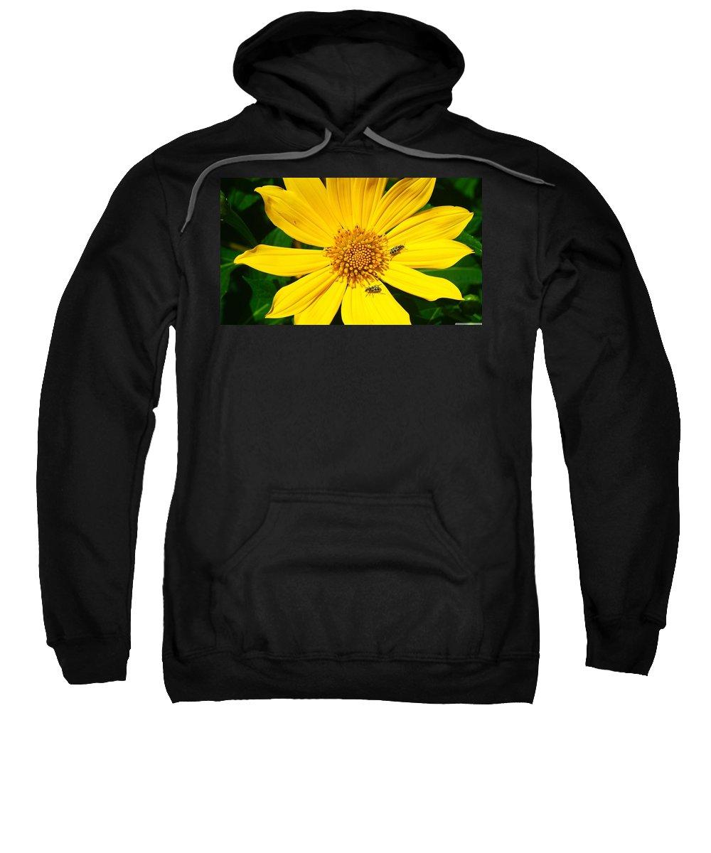 Beetle Sweatshirt featuring the digital art Beetle by Bert Mailer