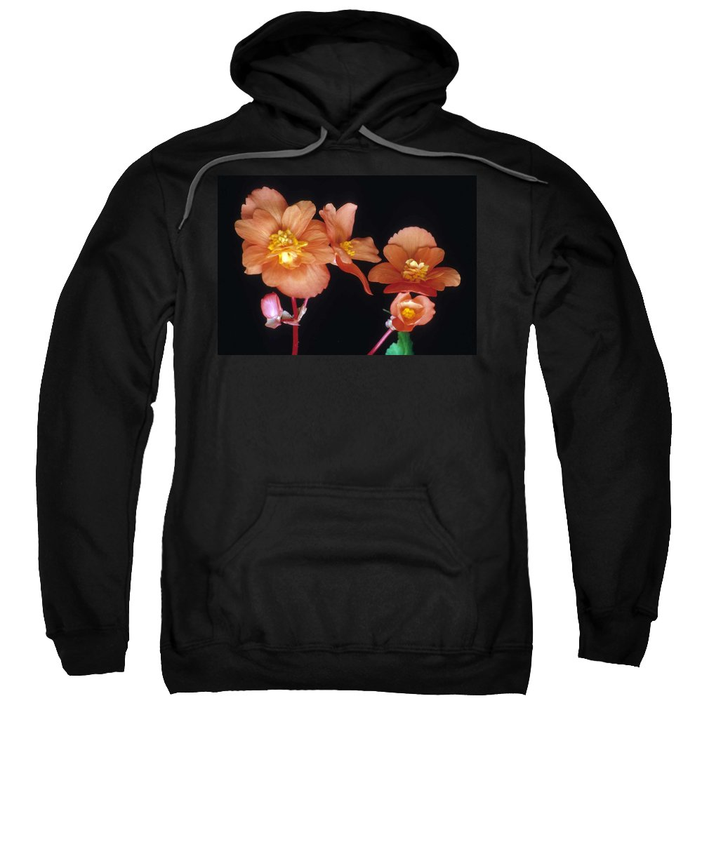 Begonia Sweatshirt featuring the photograph Begonia Buddies by Laurie Paci