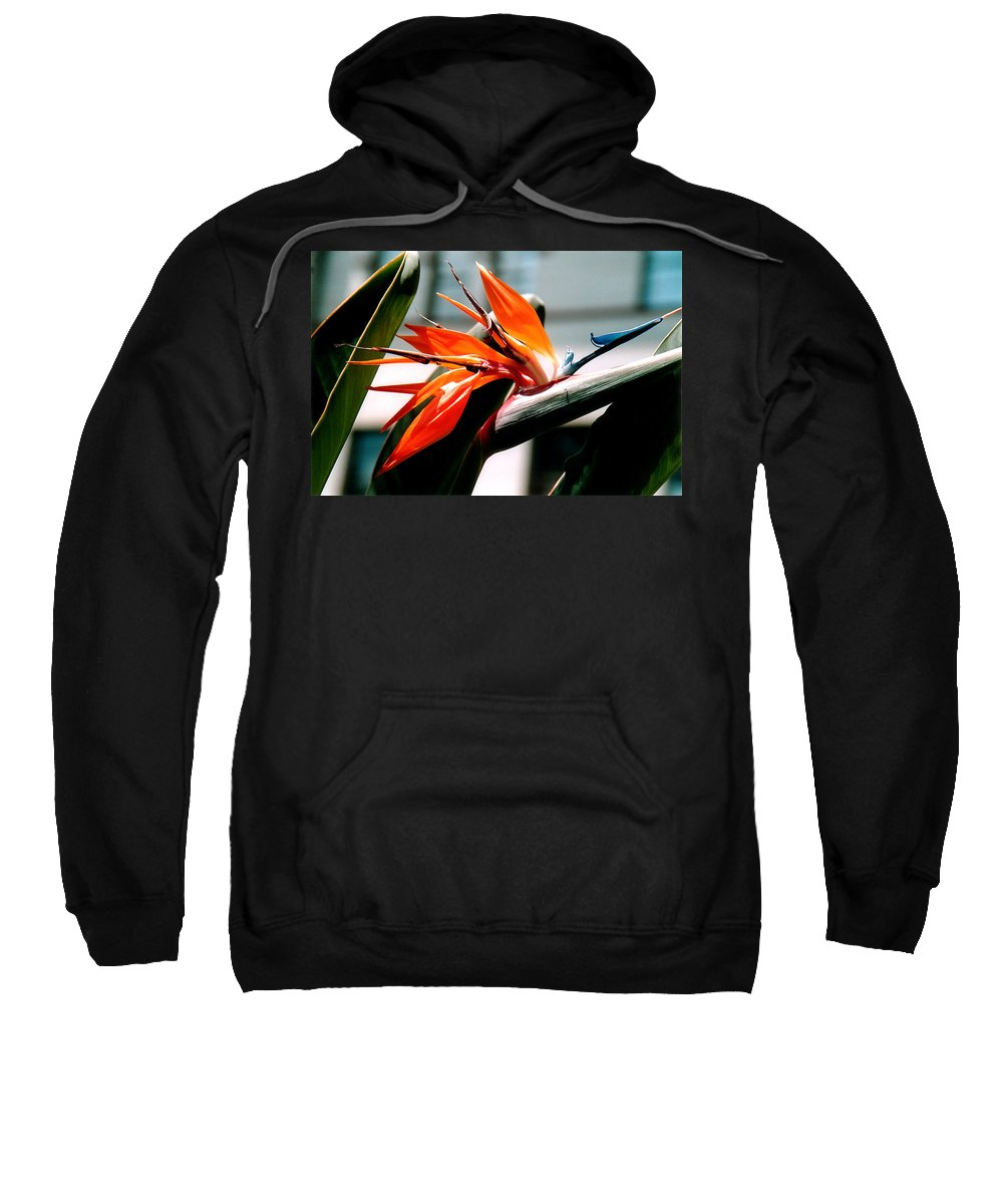 Flowers Sweatshirt featuring the photograph Bird Of Paradise 2 by Susanne Van Hulst