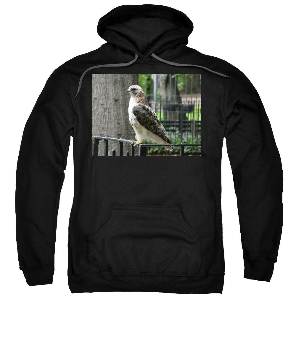 Bird Of Prey Sweatshirt featuring the photograph Bird Of Prey by Valerie Ornstein