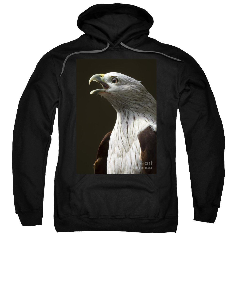 Bird Of Prey Sweatshirt featuring the photograph Bird Portrait by Angel Ciesniarska