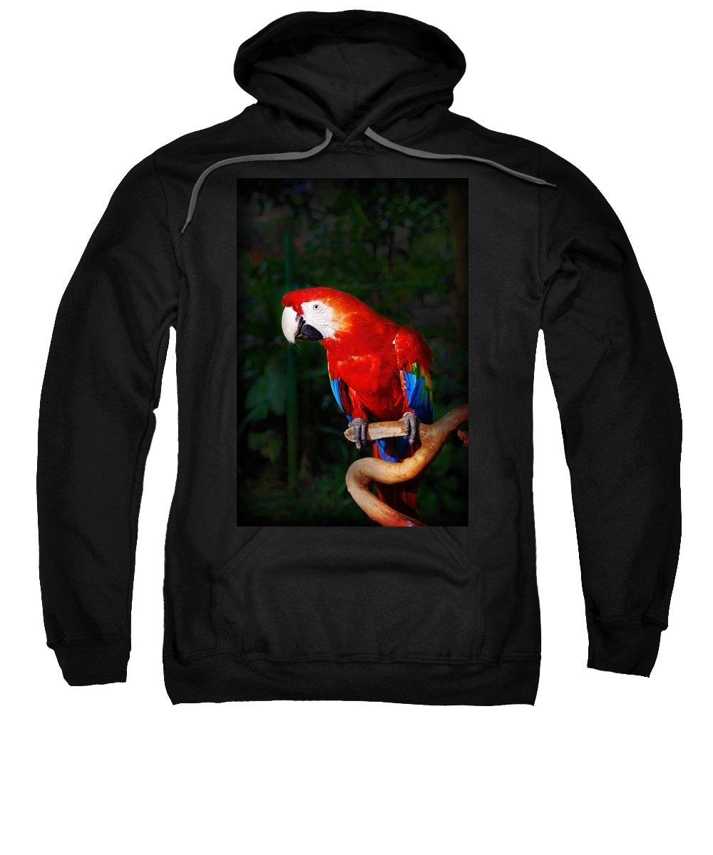 Bird Sweatshirt featuring the photograph Birdie by Charuhas Images