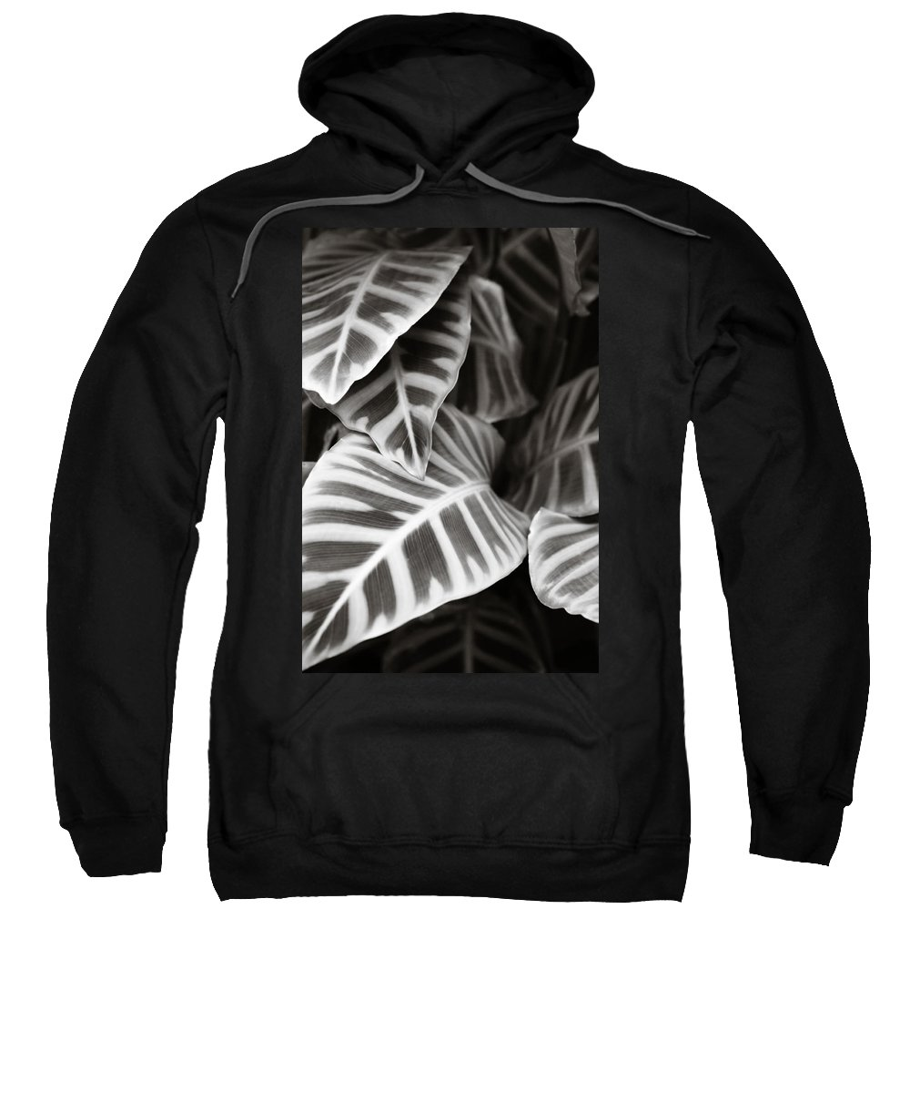 Black Sweatshirt featuring the photograph Black And White Leaves by Marilyn Hunt