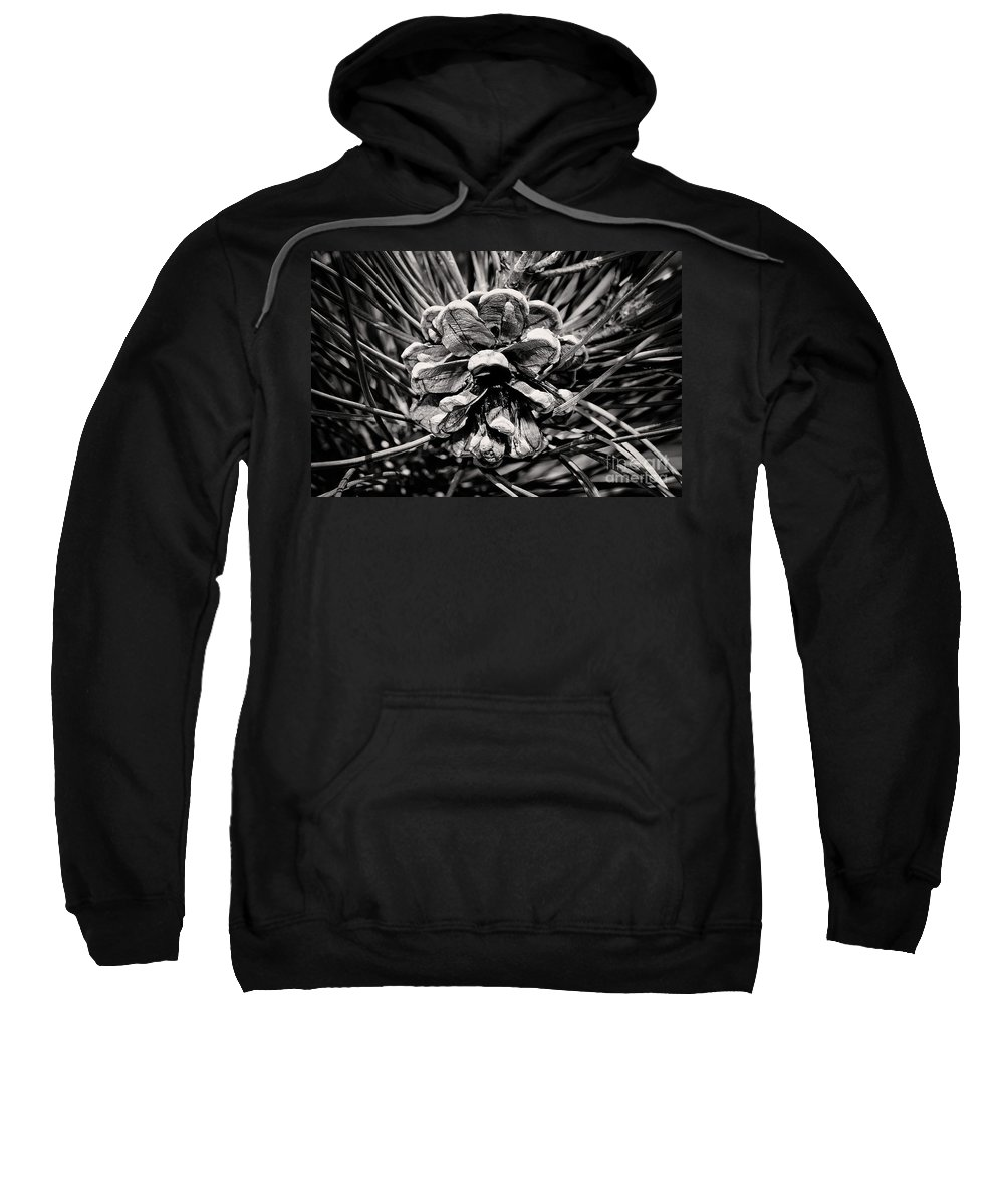 Black And White Photography Sweatshirt featuring the photograph Black And White Pine Cone Wall Art by Gwen Gibson