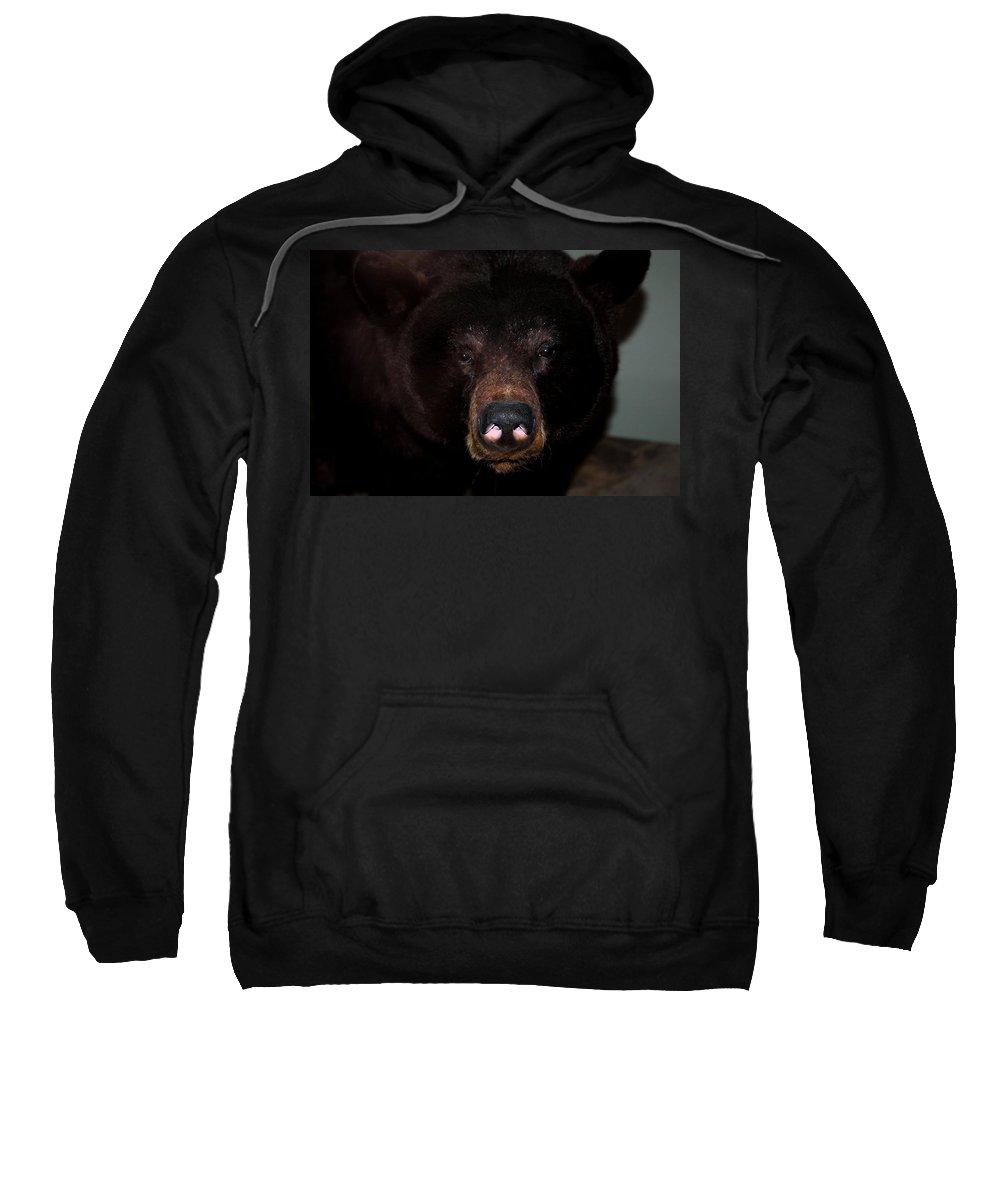 Usa Sweatshirt featuring the photograph Black Bear Sniff by LeeAnn McLaneGoetz McLaneGoetzStudioLLCcom