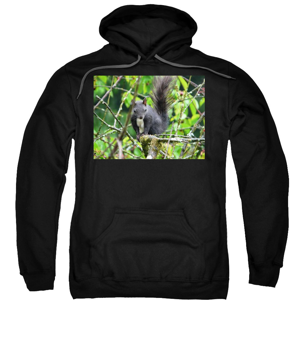 Animal Sweatshirt featuring the photograph Black Squirrel In The Cherry Tree by Valerie Ornstein