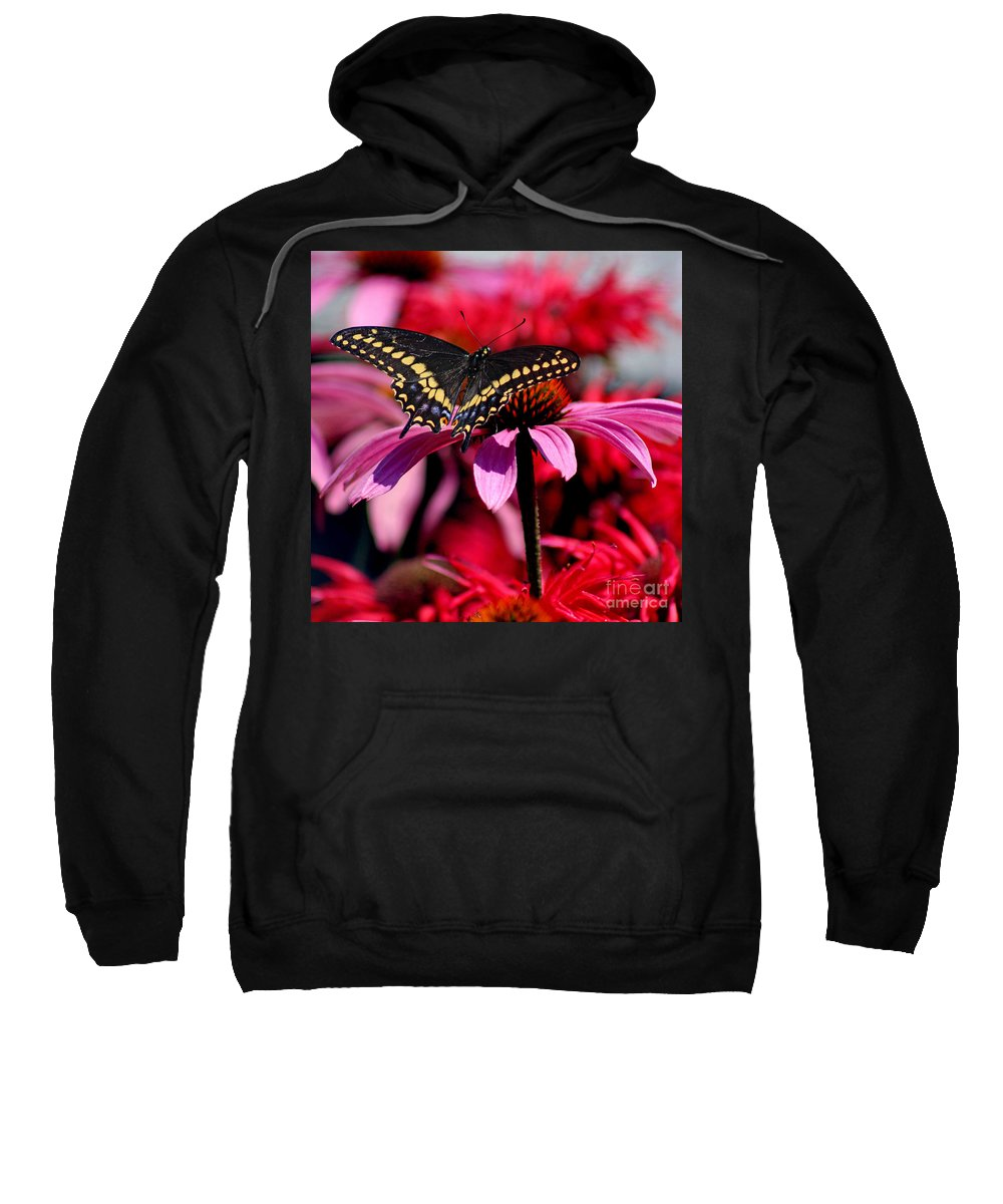 Insect Sweatshirt featuring the photograph Black Swallowtail Butterfly On Coneflower Square by Karen Adams