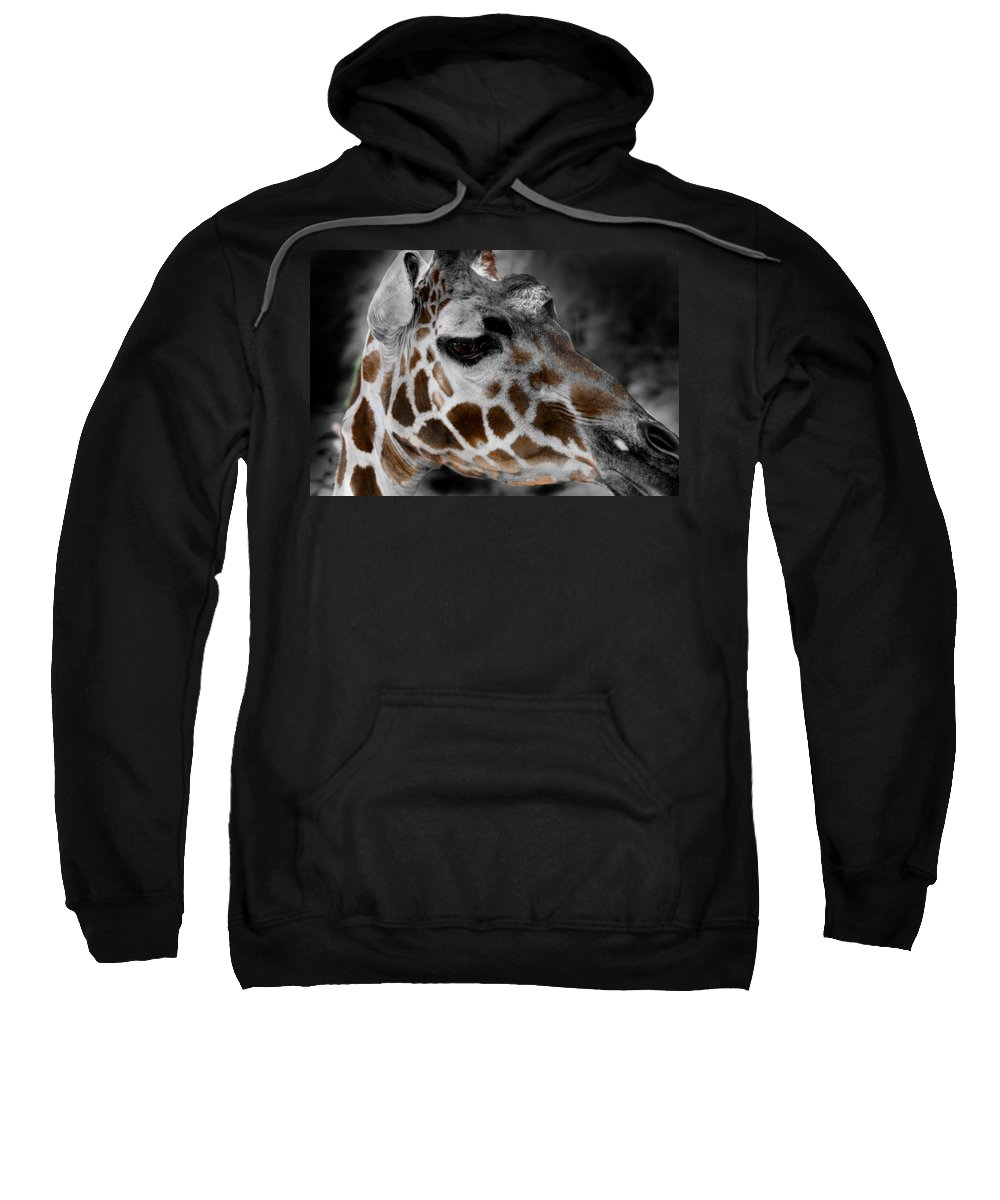 Giraffe Sweatshirt featuring the photograph Black White And Color Giraffe by Anthony Jones