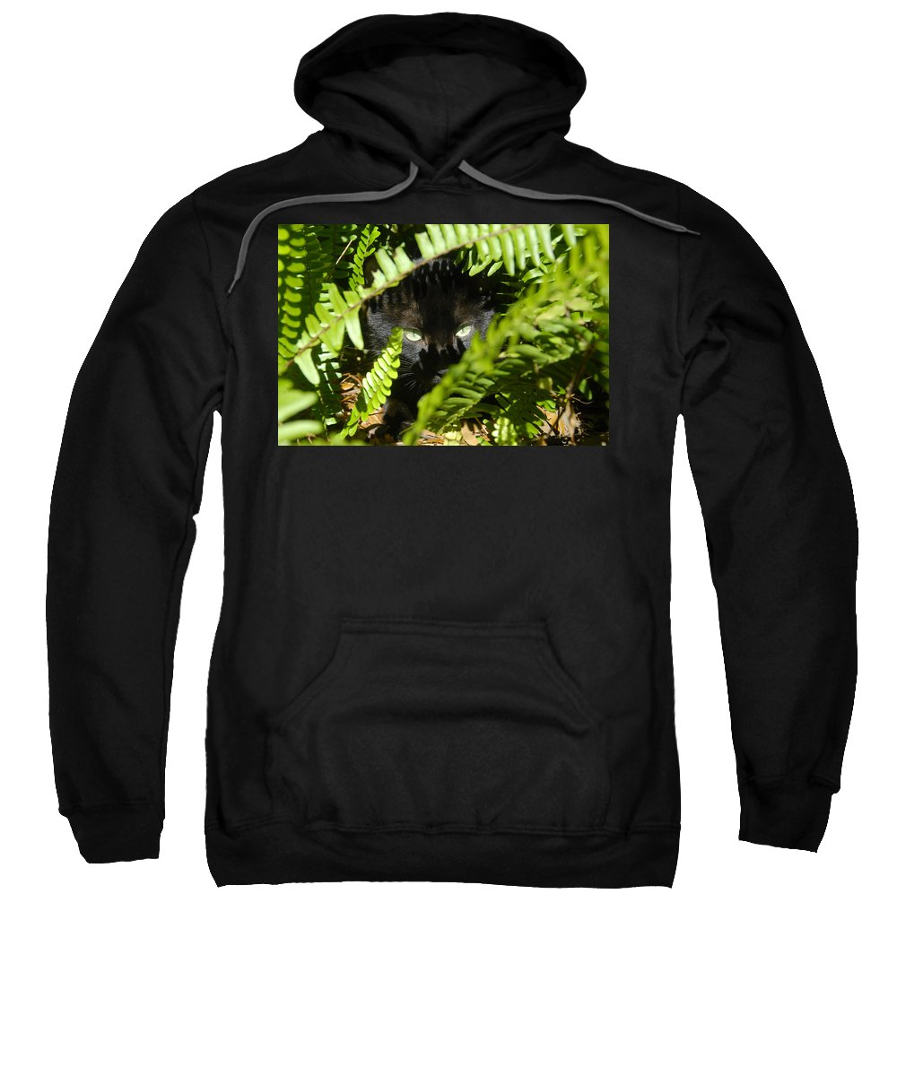 Cat Sweatshirt featuring the photograph Blackie In The Ferns by David Lee Thompson