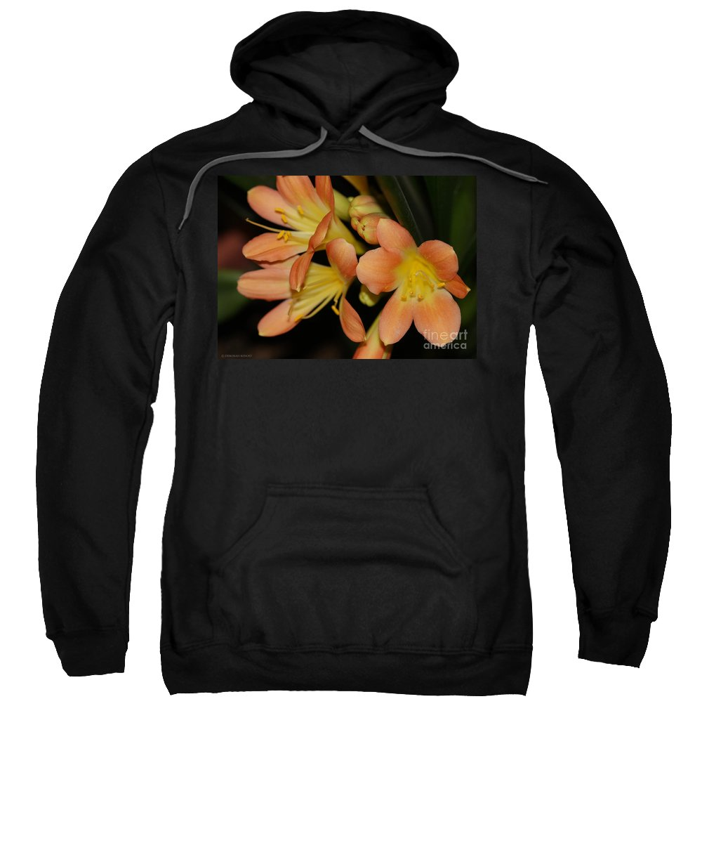 Flowers Sweatshirt featuring the photograph Blast Of Sunshine by Deborah Benoit