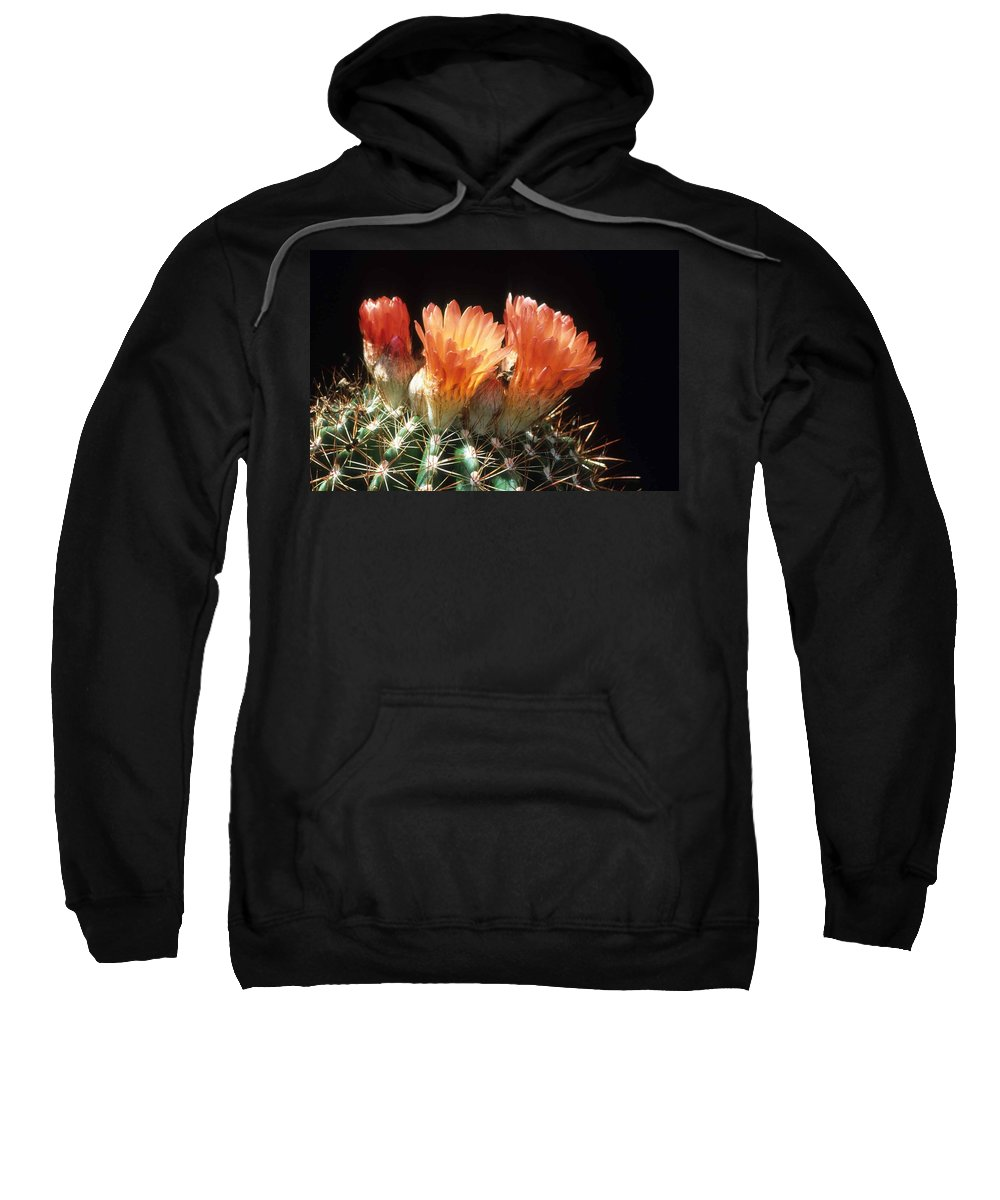 Barrel Cactus Sweatshirt featuring the photograph Bloomin' Barrel by Laurie Paci
