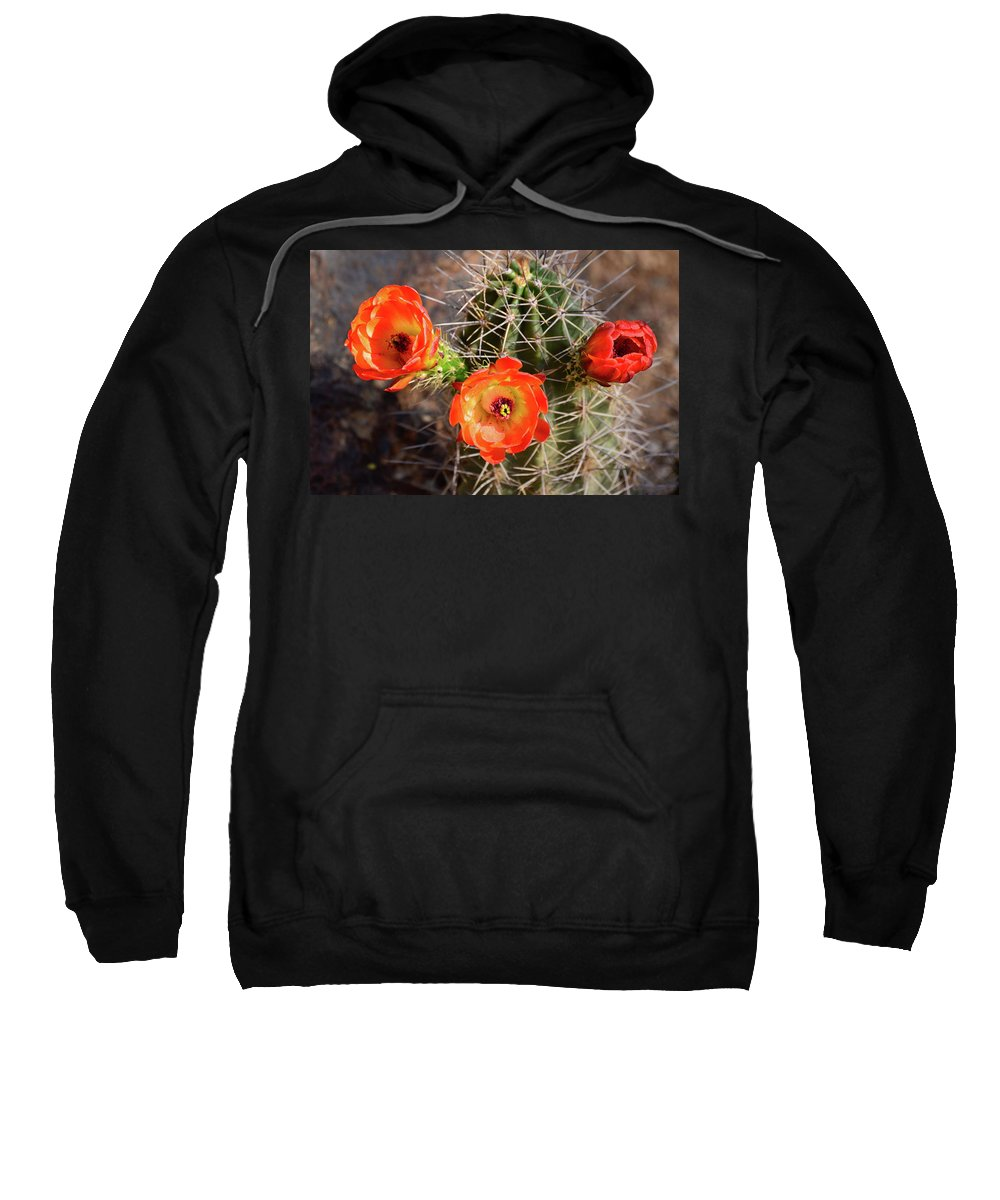 Cactus Sweatshirt featuring the photograph Blossom Trio by Everett Staley