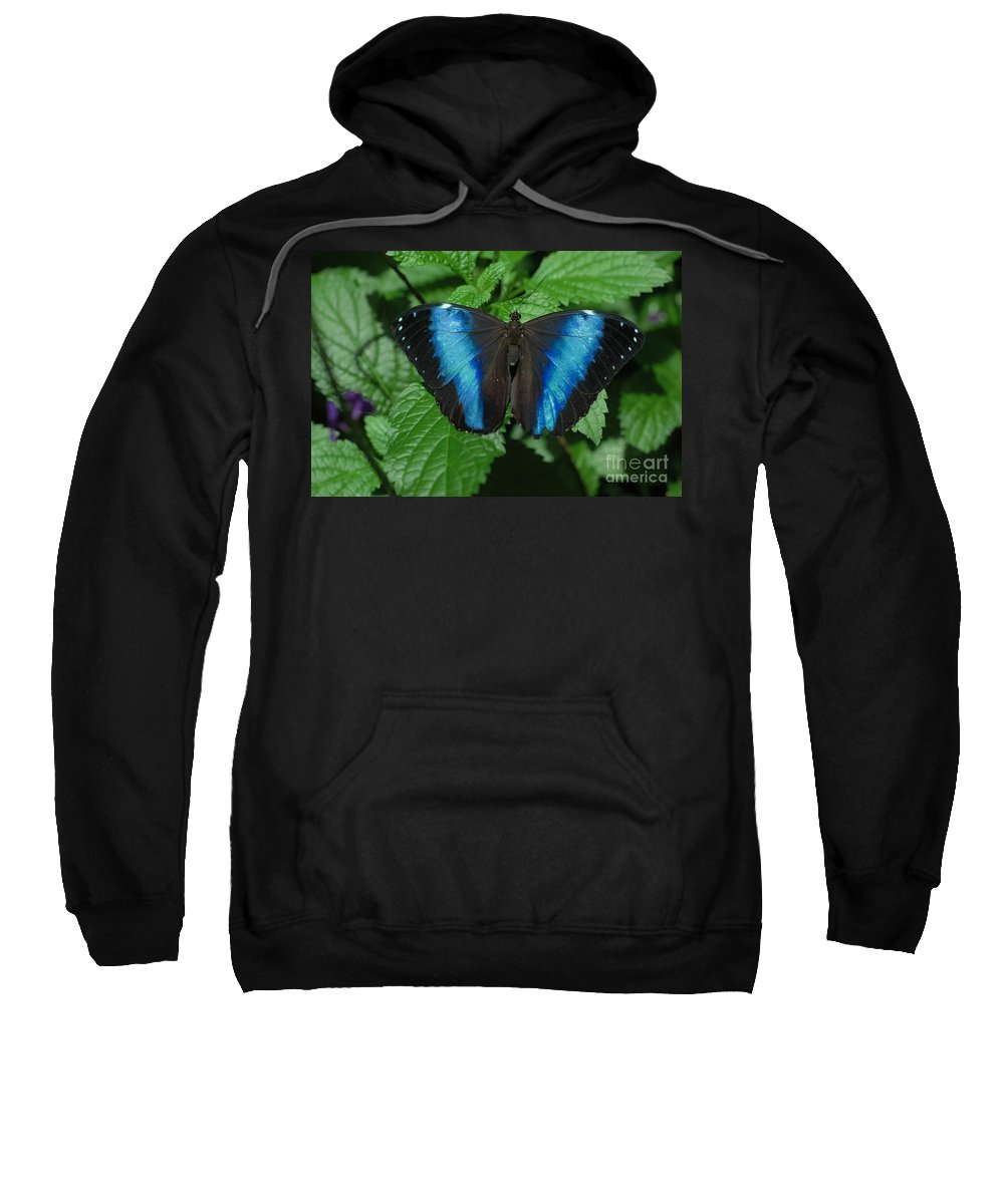 Blue Sweatshirt featuring the photograph Blue And Black by Kathleen Struckle