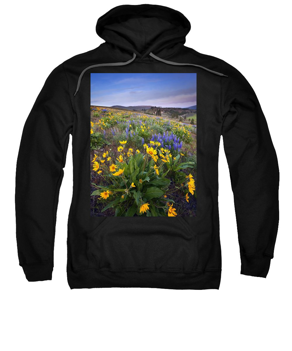 Lupine Sweatshirt featuring the photograph Blue And Gold by Mike Dawson
