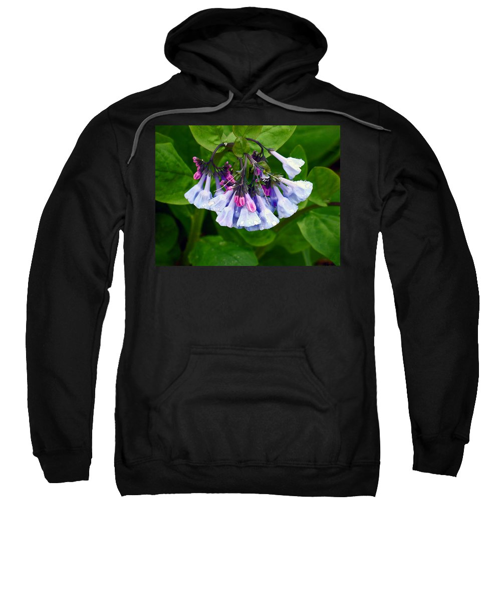 Native Landscape Sweatshirt featuring the photograph Blue Bells by Steve Karol