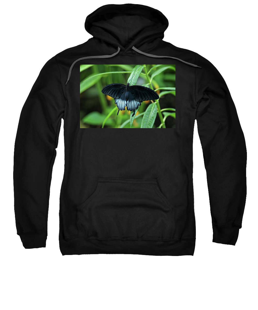 Butterfly Sweatshirt featuring the photograph Blue Butterfly II by Sandy Keeton