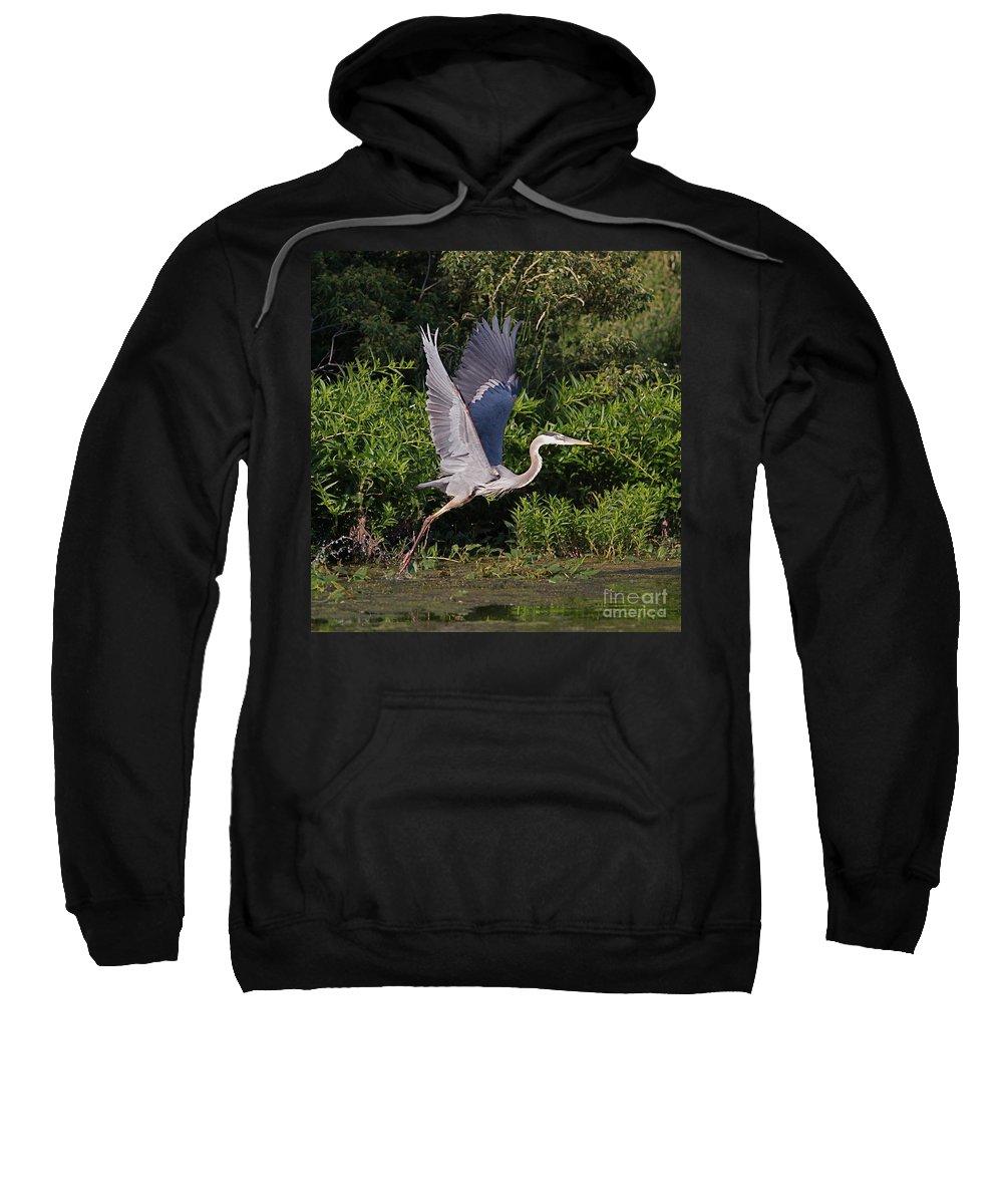 Bird Of Prey Bird Sweatshirt featuring the photograph Blue Heron by Robert Pearson
