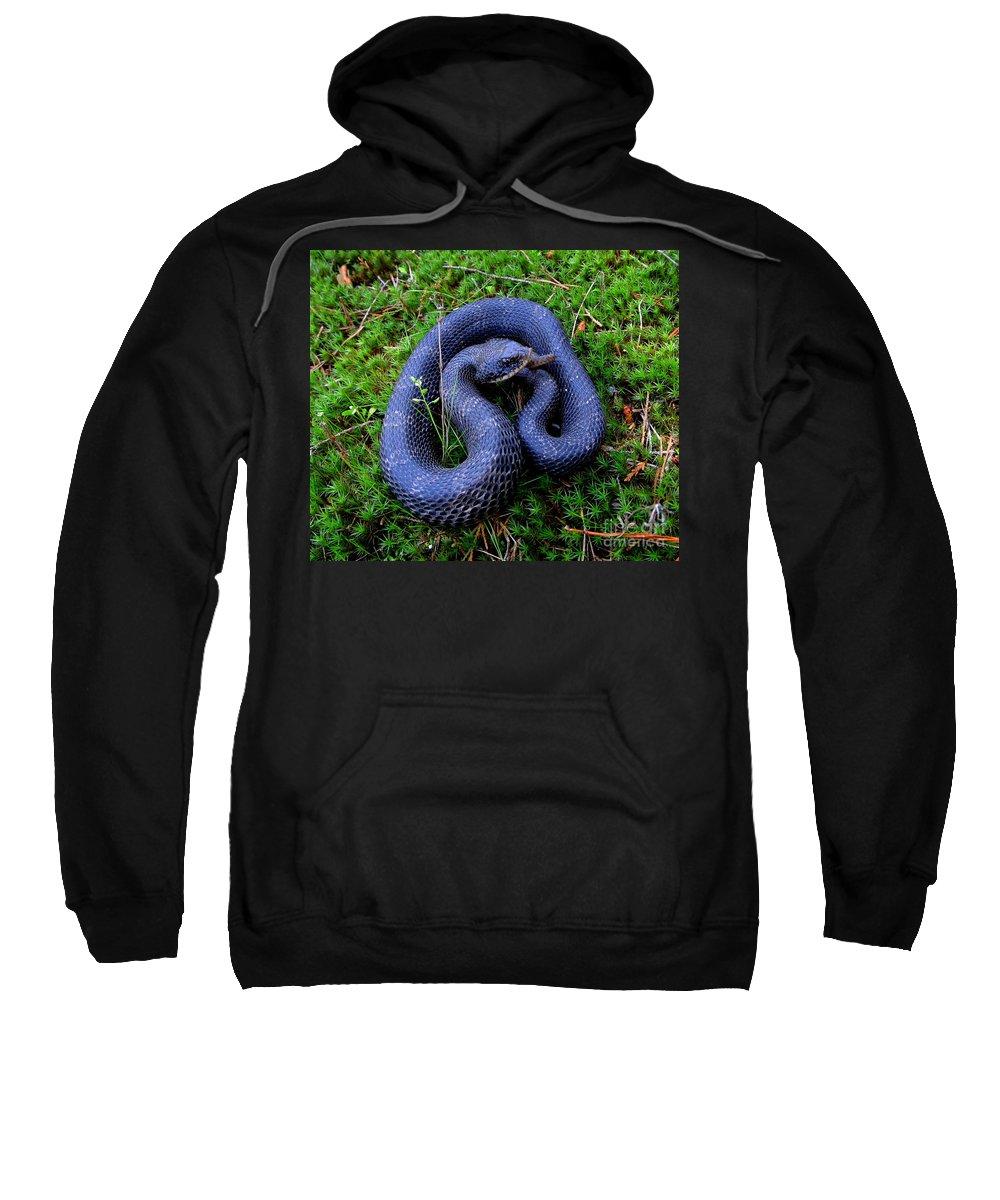Blue Hognose Prints Sweatshirt featuring the photograph Blue Hognose by Joshua Bales