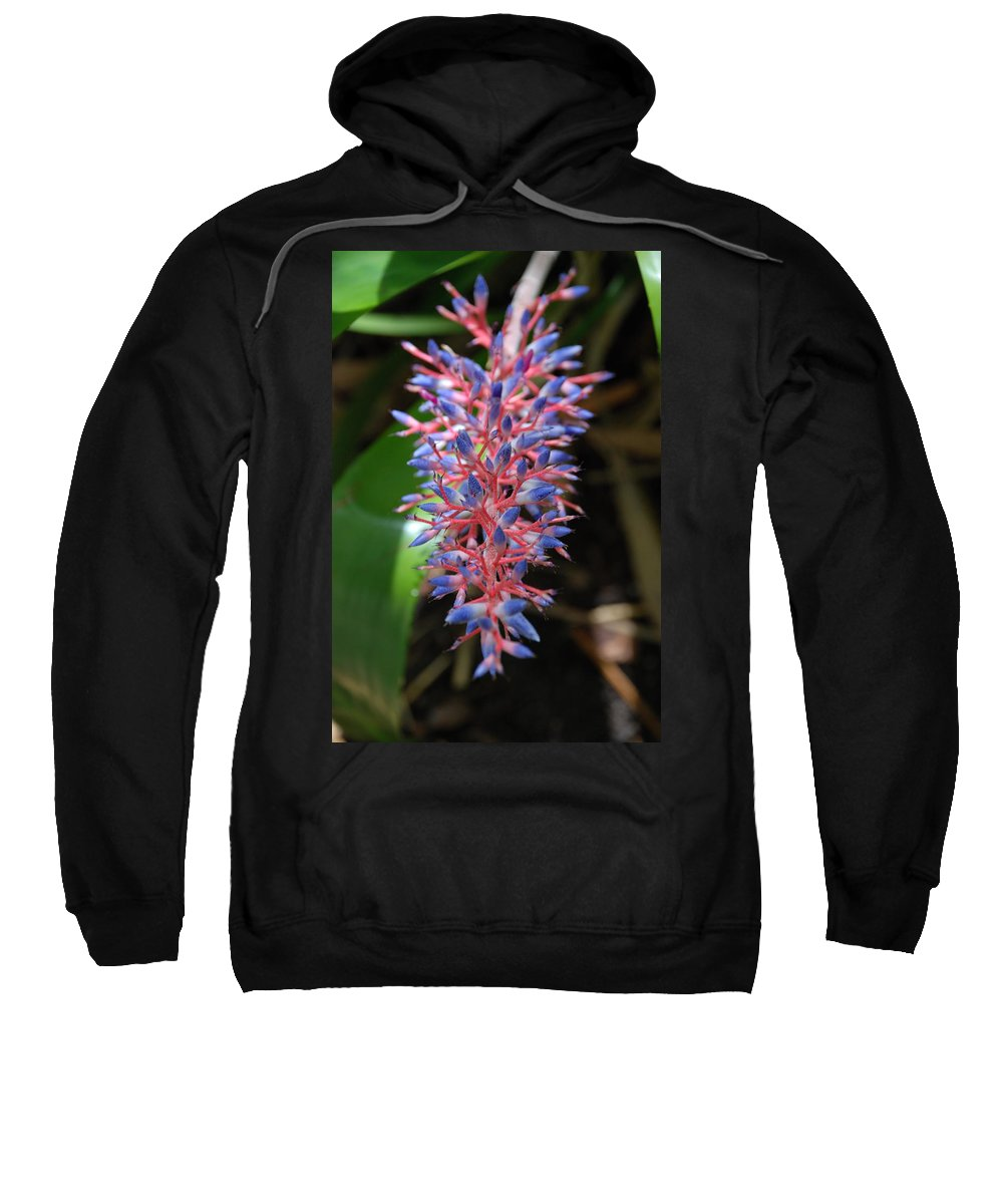 Red Sweatshirt featuring the photograph Blue Red Plant by Rob Hans