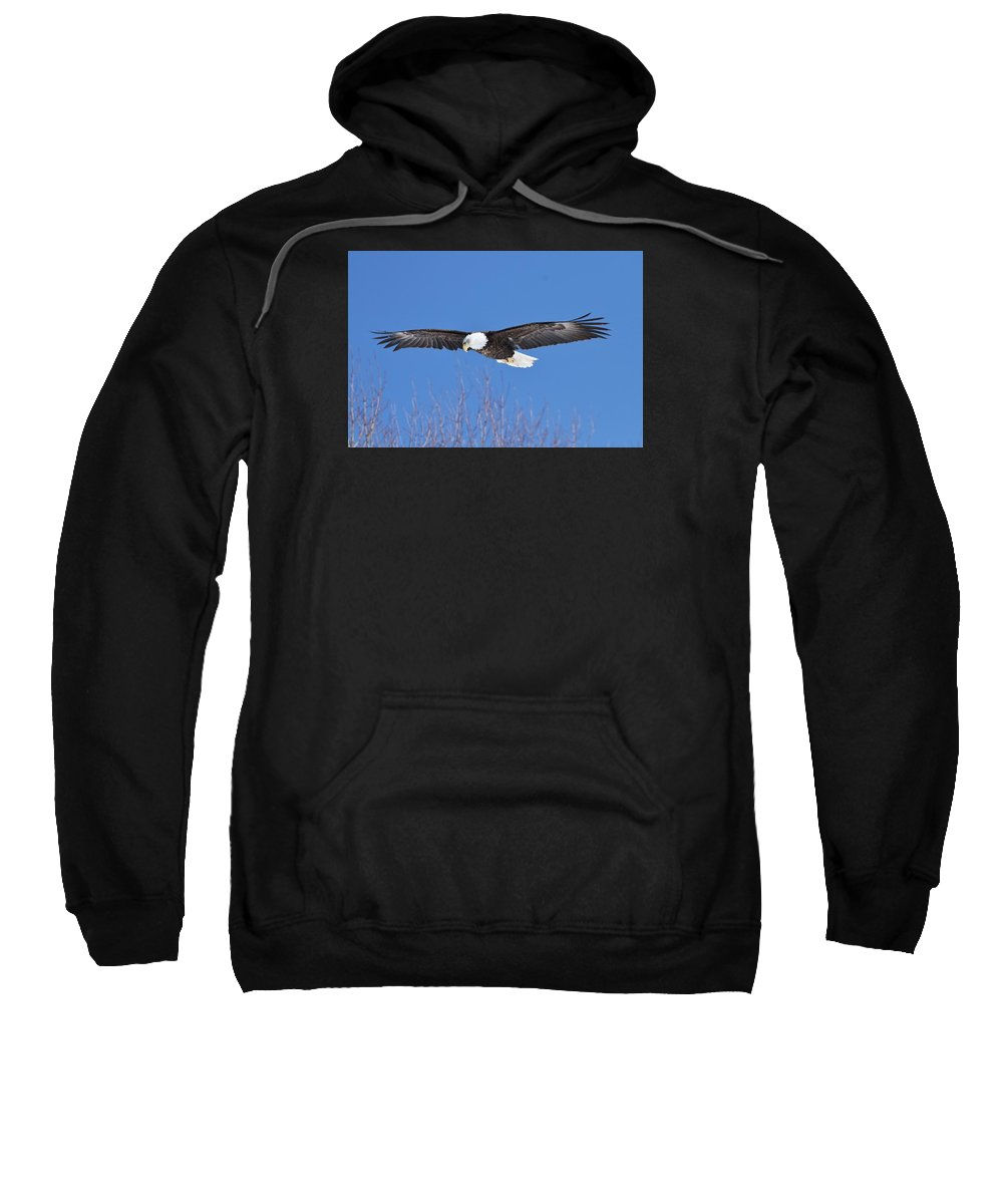 Bald Eagle Sweatshirt featuring the photograph Blue Sky Glide by Teresa McGill