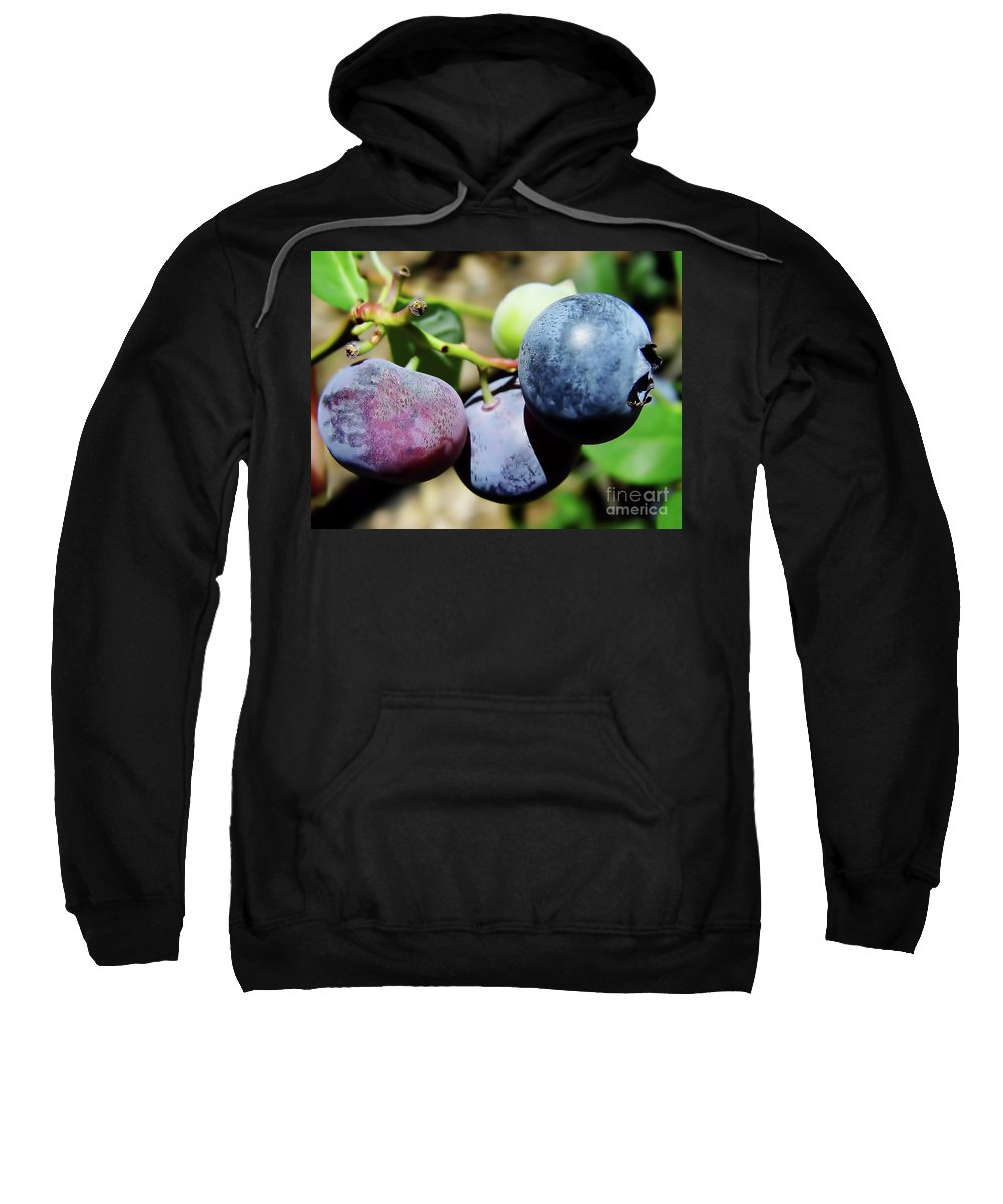 Blue Berries Sweatshirt featuring the photograph Blues In The Florida Berries by D Hackett