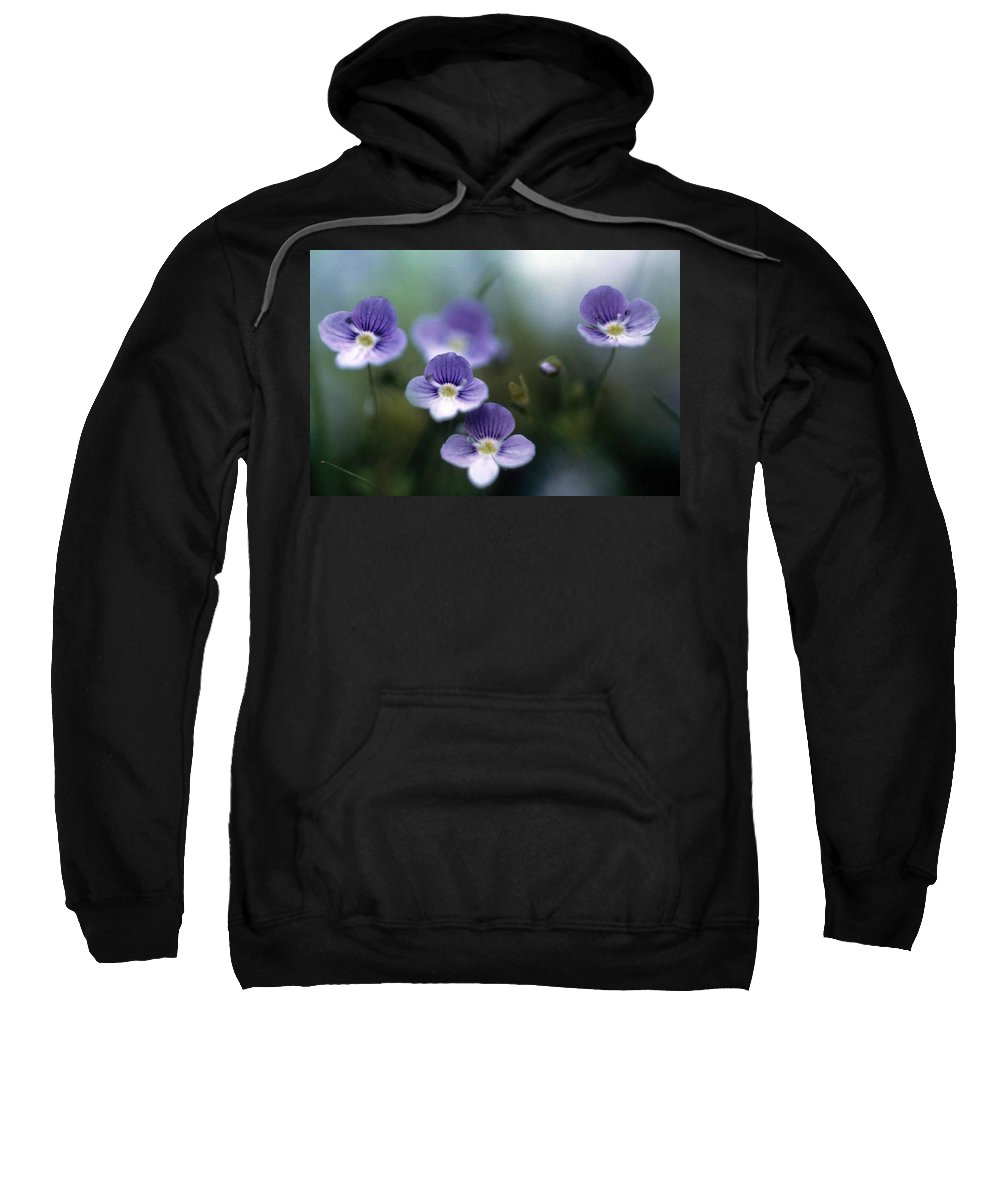 Bluettes Sweatshirt featuring the photograph Bluettes by Laurie Paci