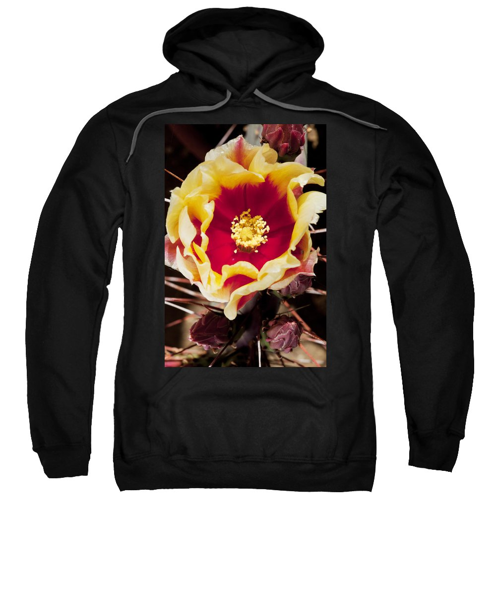 Prickly Pear Sweatshirt featuring the photograph Bold And Beautiful by Kelley King