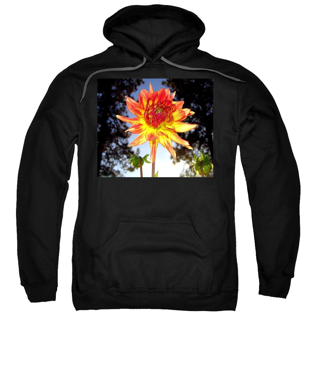 Dahlia Sweatshirt featuring the photograph Bold And Beautiful by Will Borden