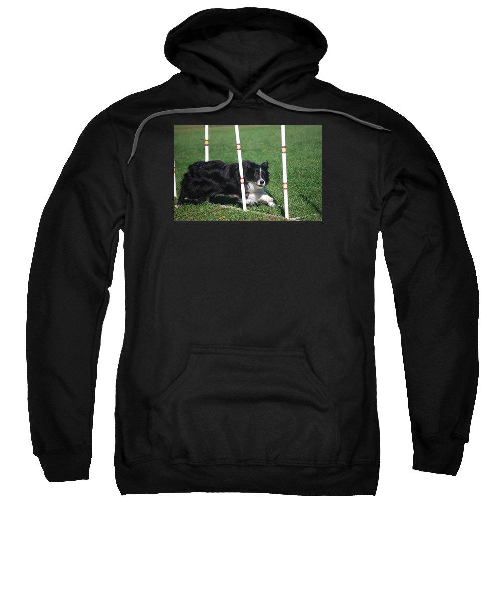 Animal Sweatshirt featuring the photograph Border Collie Weaving by Melinda Schneider