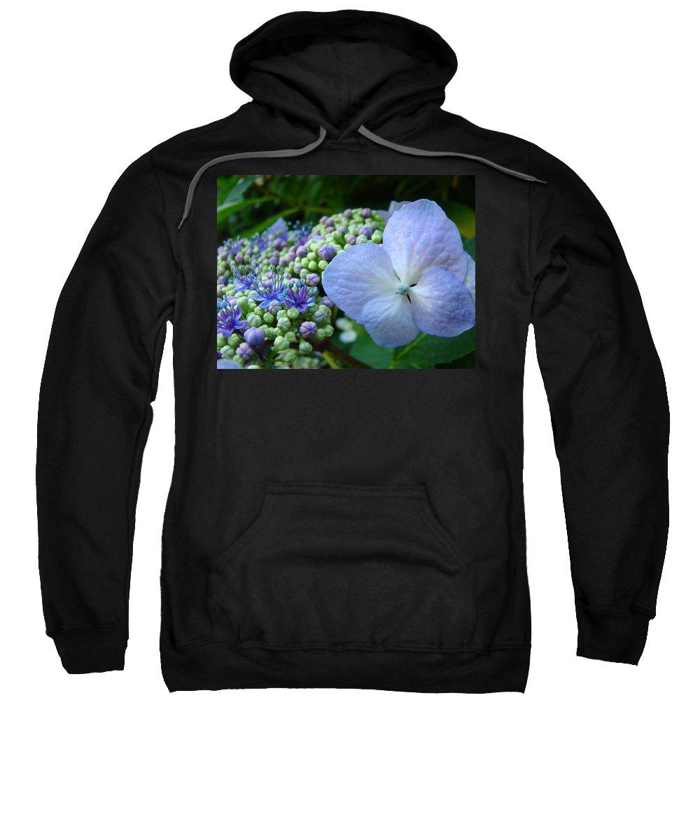 Hydrangea Sweatshirt featuring the photograph Botanical Garden Blue Hydrangea Flowers Baslee Troutman by Baslee Troutman