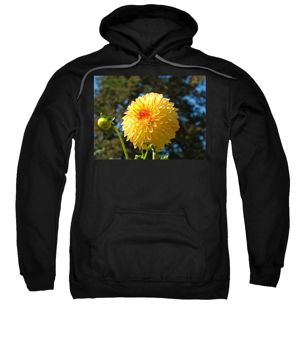 Flowers Sweatshirt featuring the photograph Bright Colorful Dahlia Flower Art Prints Baslee Troutman by Baslee Troutman