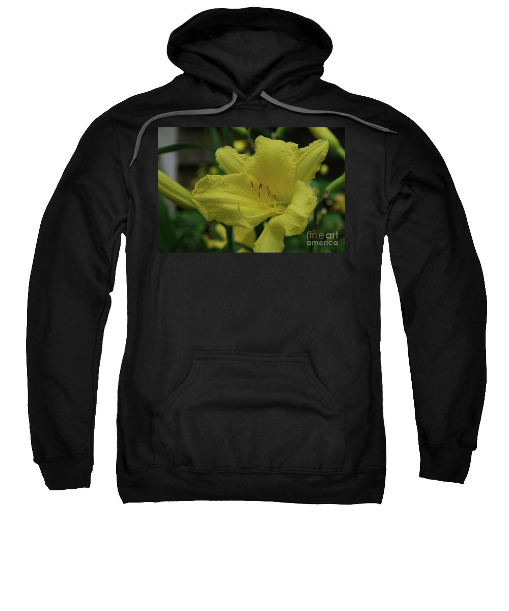 Lily Sweatshirt featuring the photograph Brilliant Yellow Daylilies Flowering In A Garden by DejaVu Designs