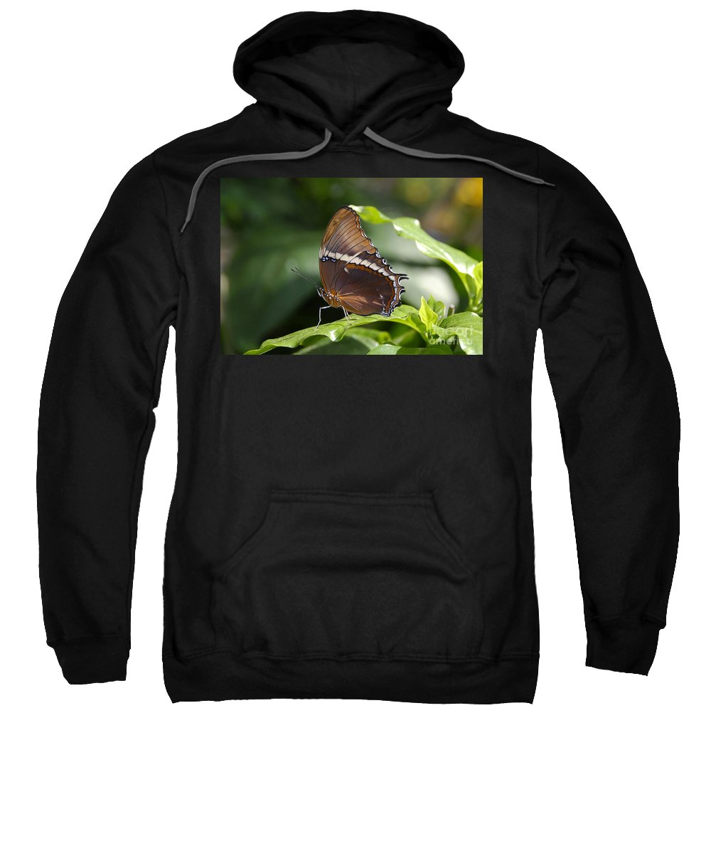 Butterfly Sweatshirt featuring the photograph Brown Beauty by David Lee Thompson