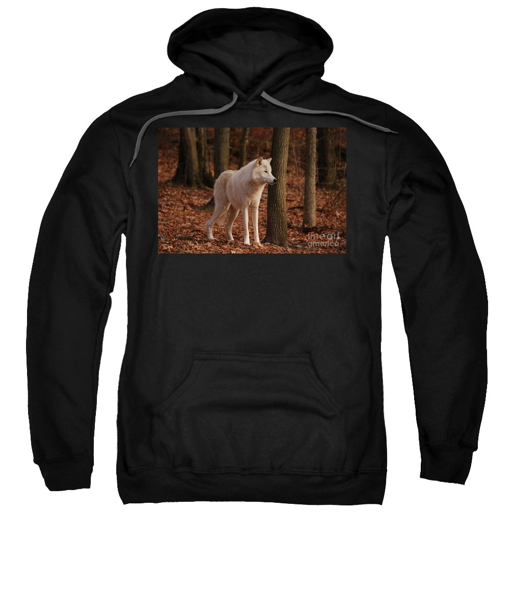 Wolf Sweatshirt featuring the photograph Brown Eyes by Lori Tambakis