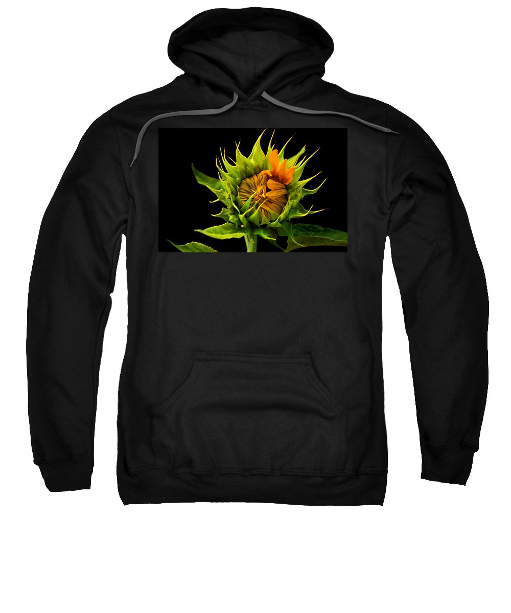 Gerber Daisy Sweatshirt featuring the photograph Budding Beauty by Laurie Paci
