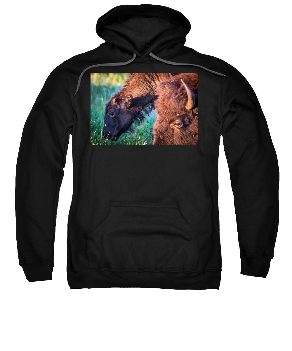 Mammal Sweatshirt featuring the photograph Buffalo Family by Paul Freidlund