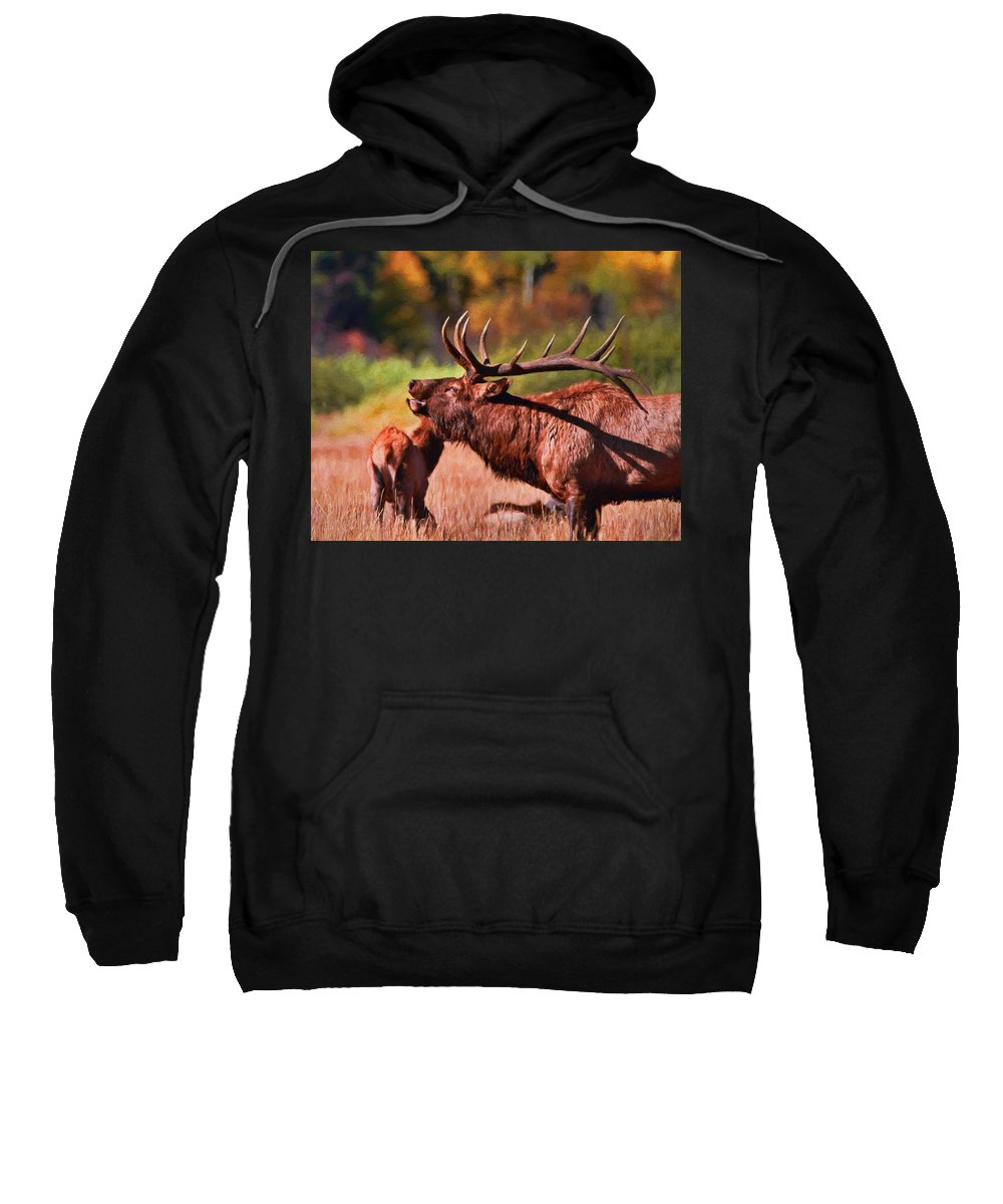 Bugling Bull Elk In Rocky Mountain National Park Sweatshirt featuring the painting Bugling Elk In Autumn by Dan Sproul