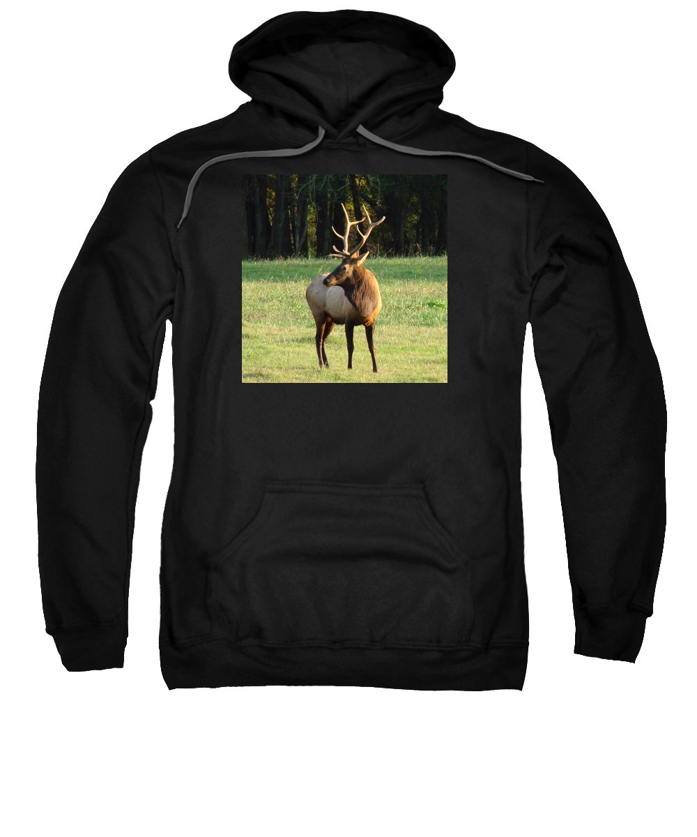 Elk Sweatshirt featuring the photograph Bull Elk I by Mary Halpin